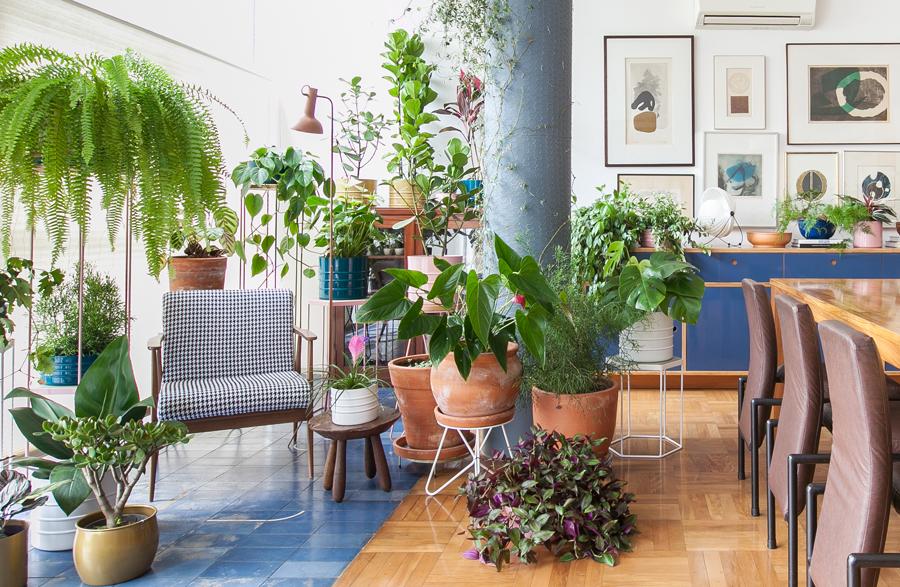 Apartamento com muitas plantas e espécies