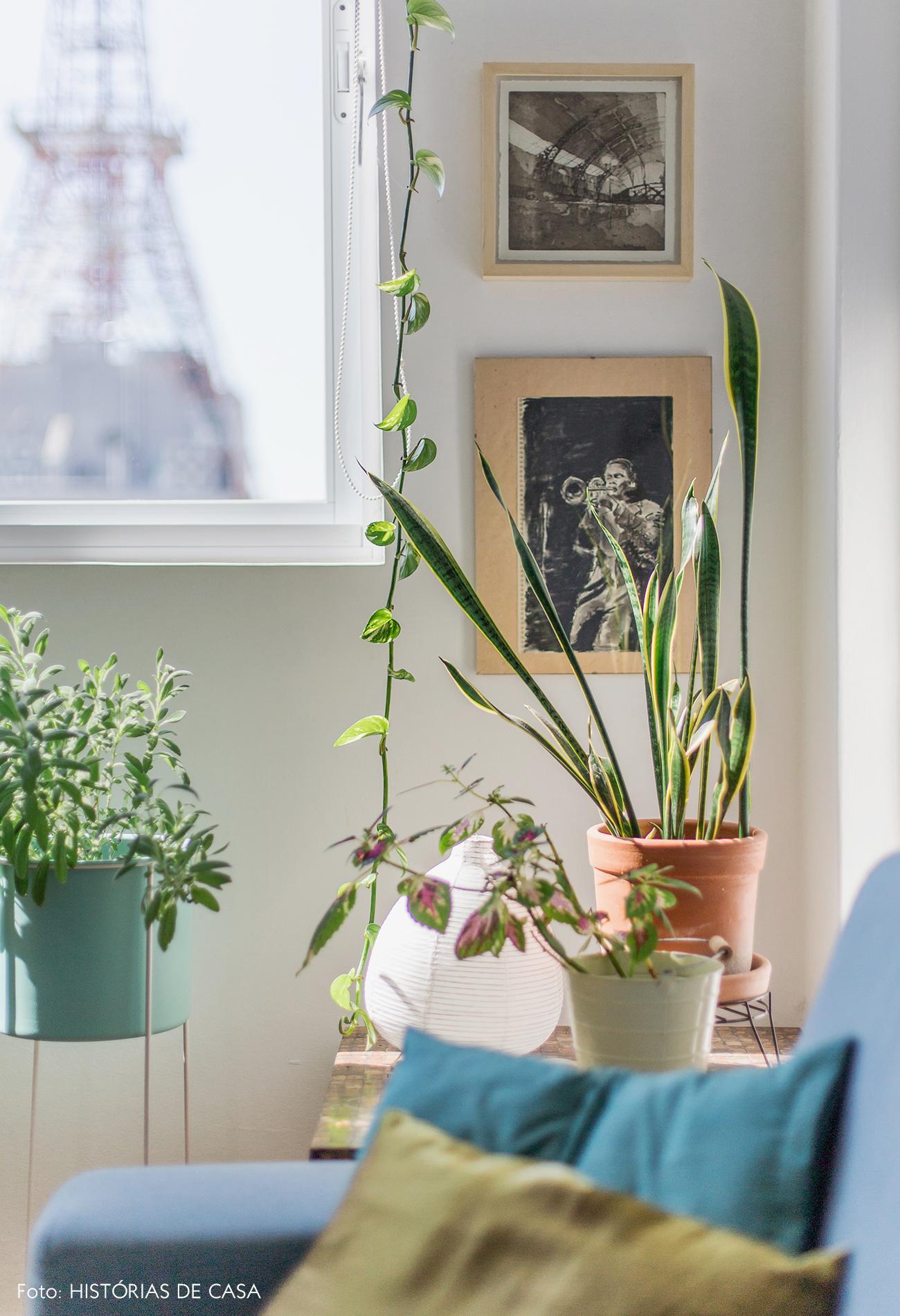 Vasos na mesa lateral ao lado da janela, plantas em apartamento