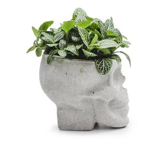Vaso Cranio Cabeludo