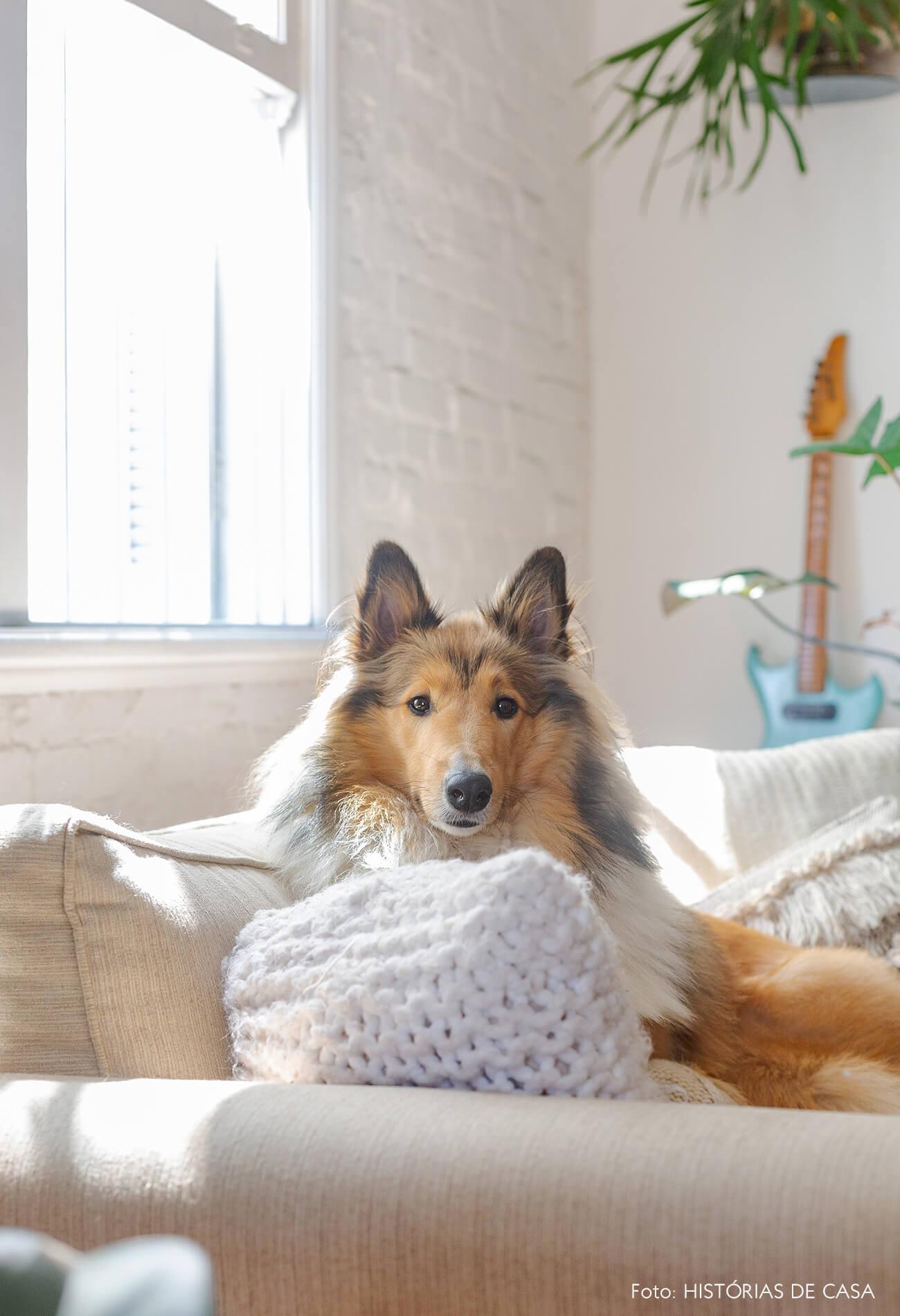 Border collie sentada no sofá