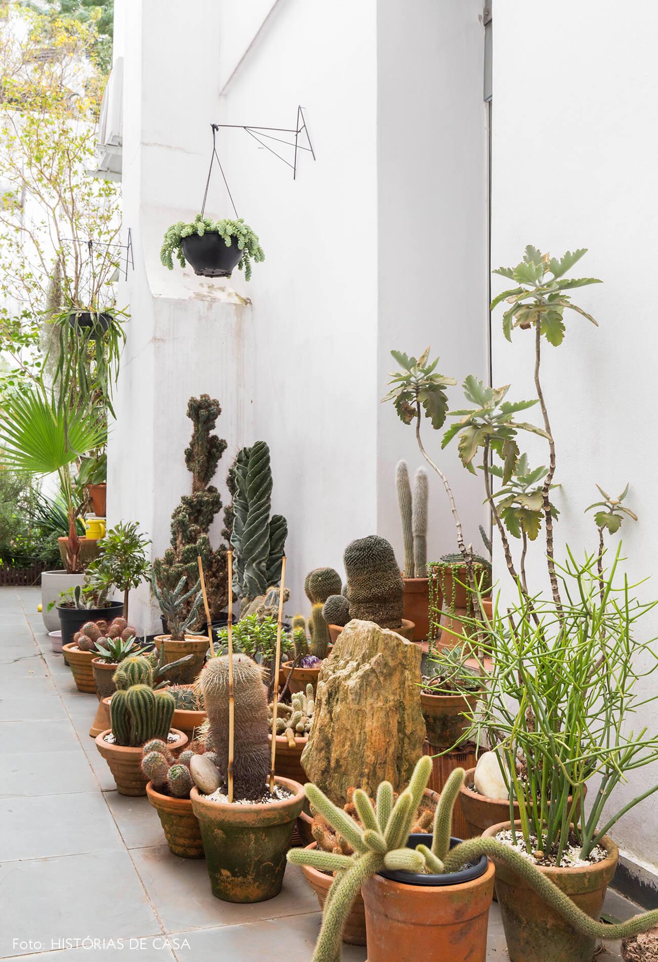 Jardim lateral com coleção de cactos