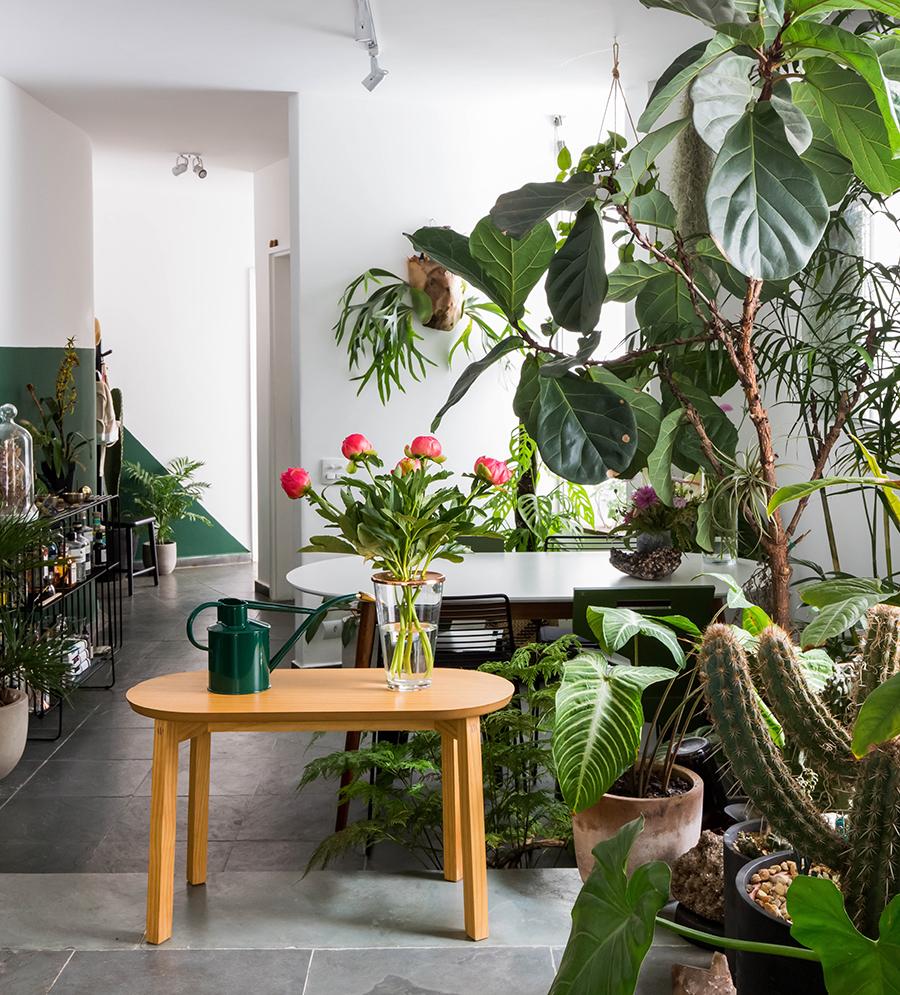 Sala cheia de plantas na casa do FLO