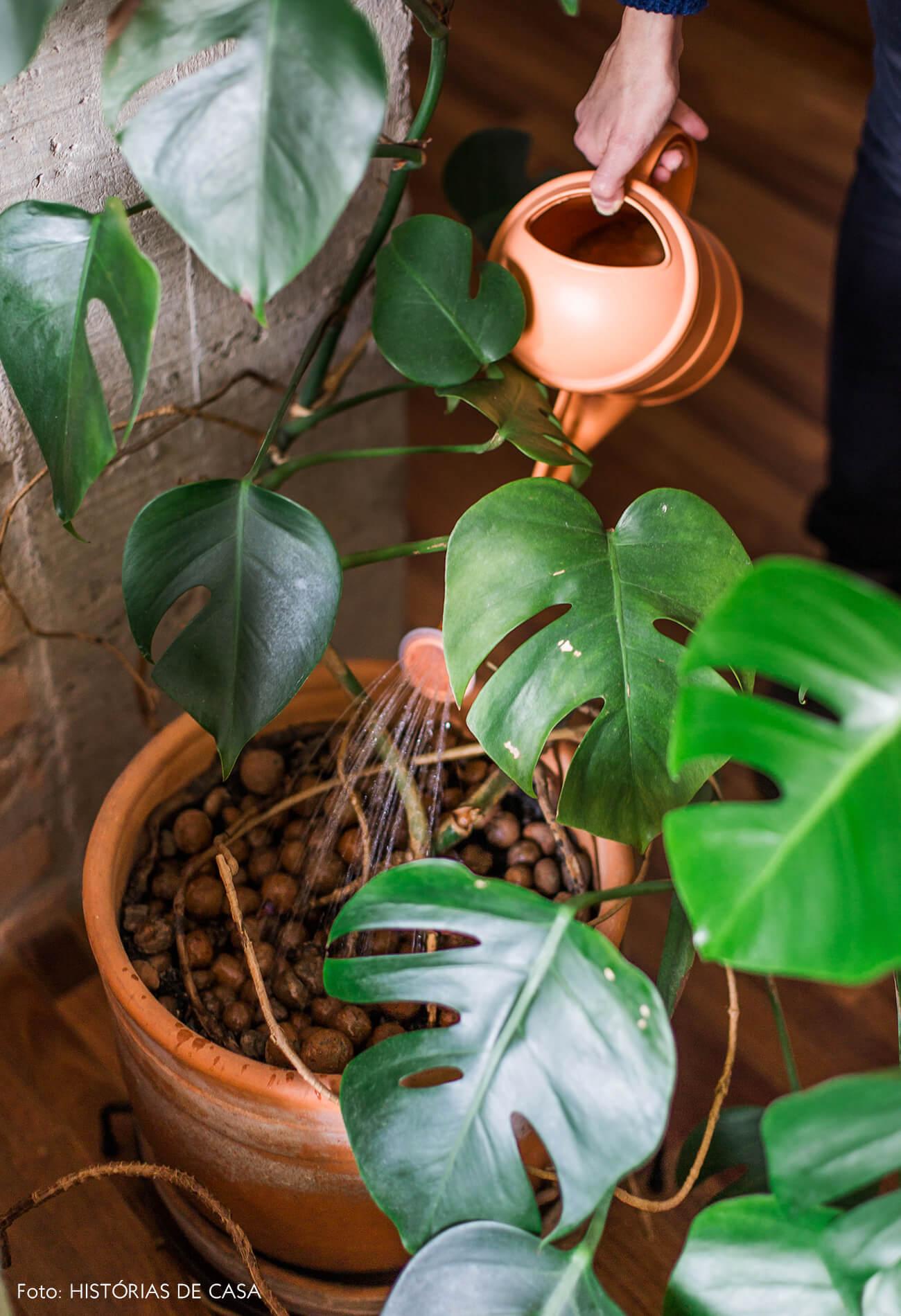 Apartamento com plantas, costela-de-adão
