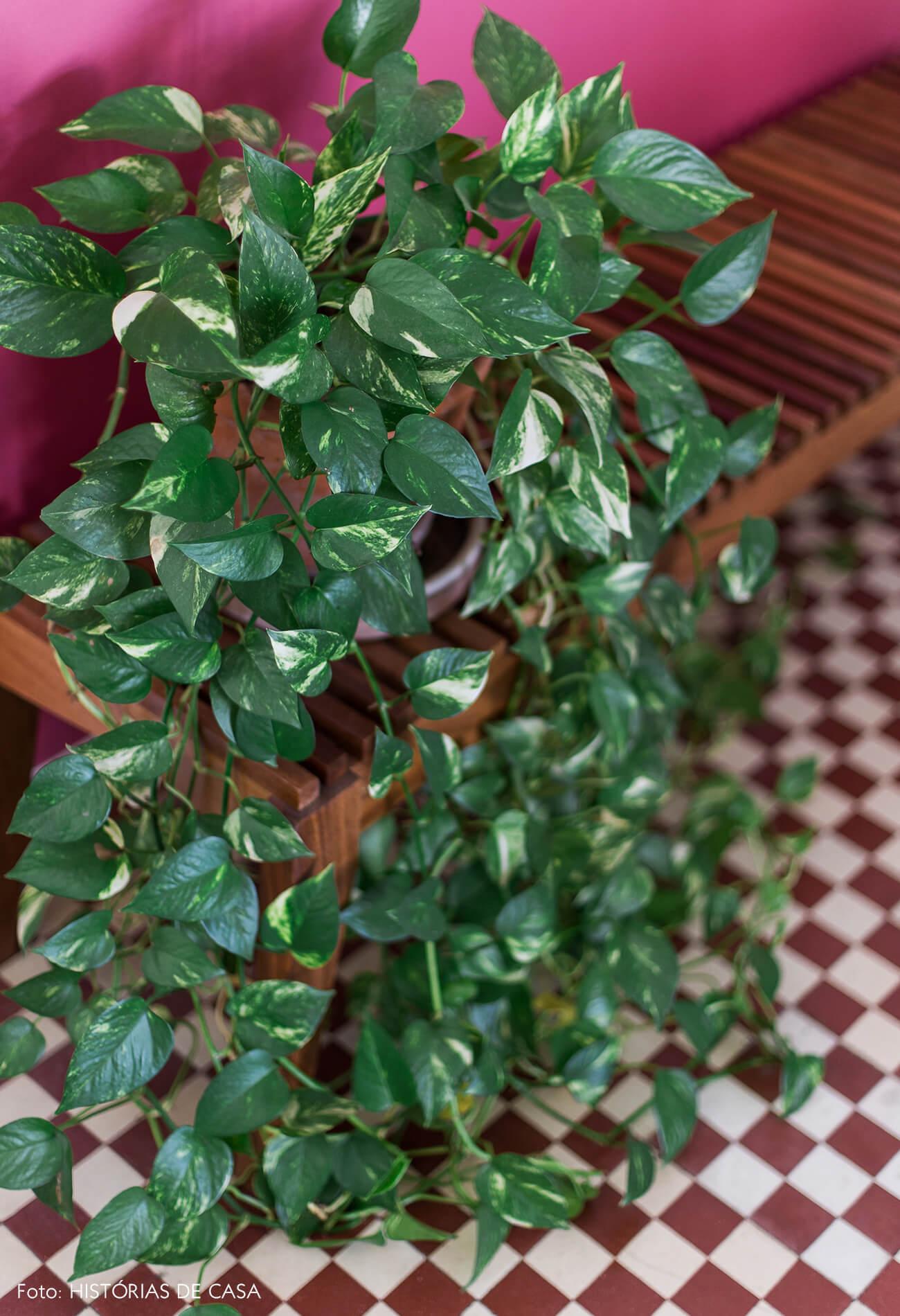 Apartamento com plantas, jiboia pendente