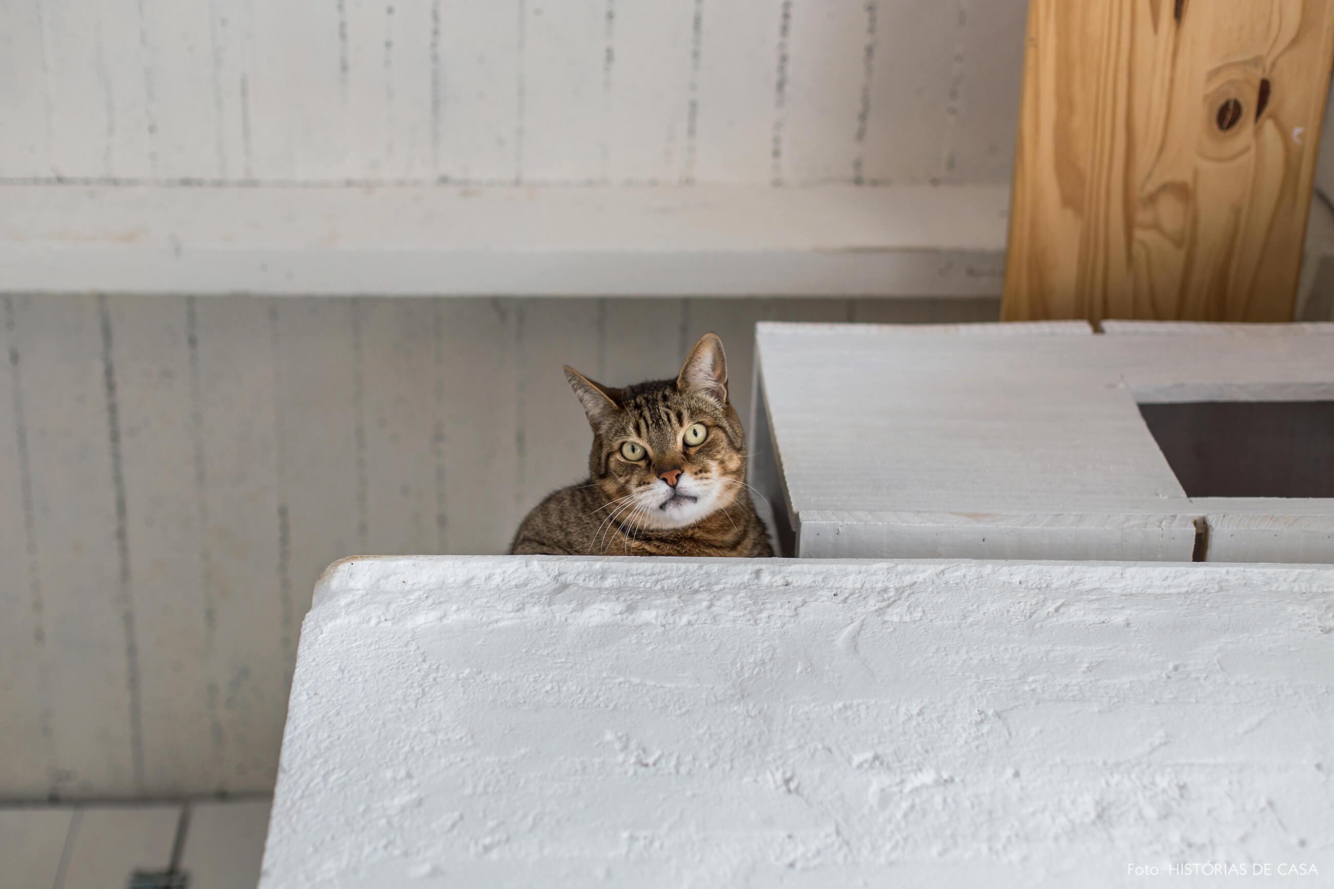 Casa com gato, casinha no alto