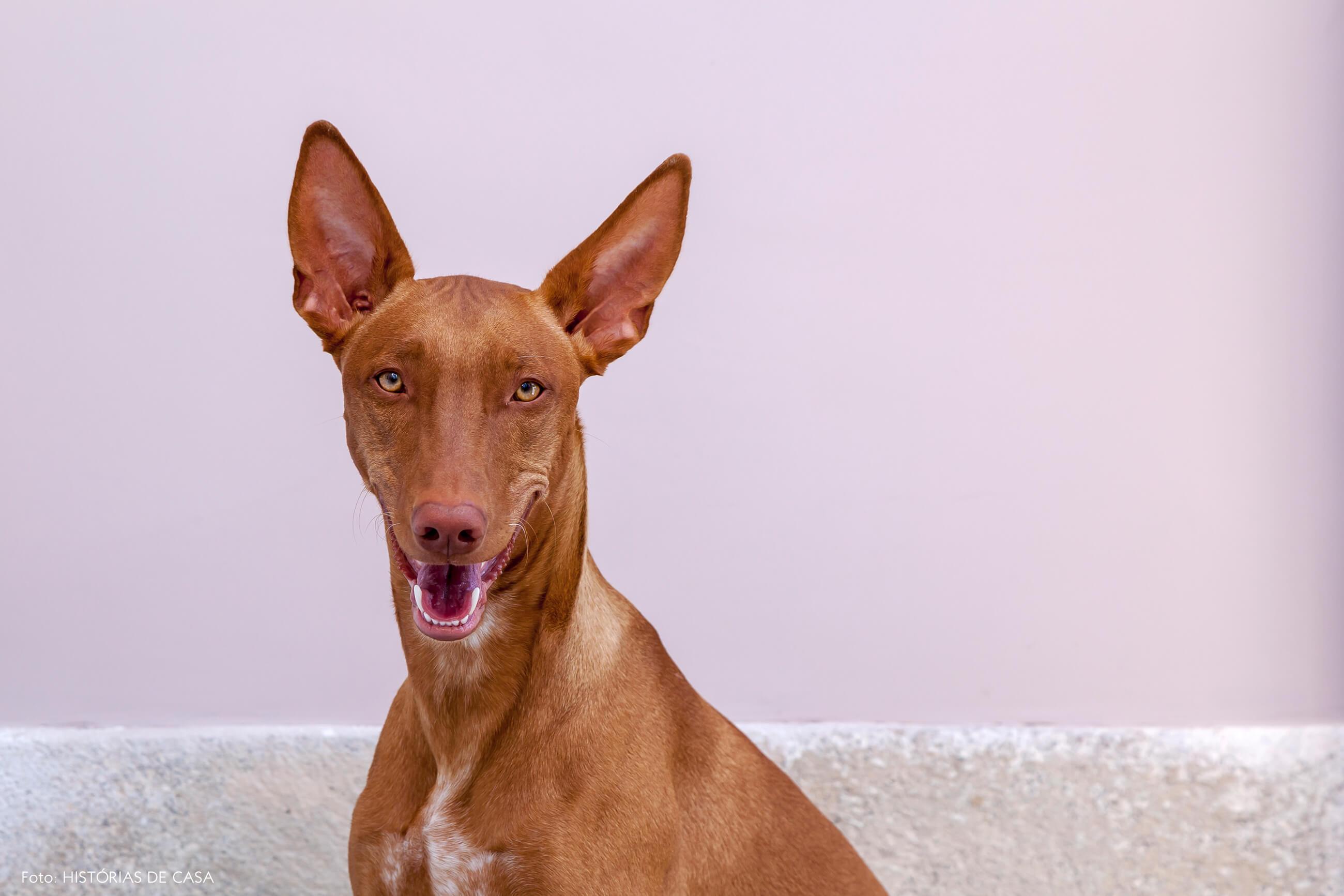 Cachorro com parede rosa claro