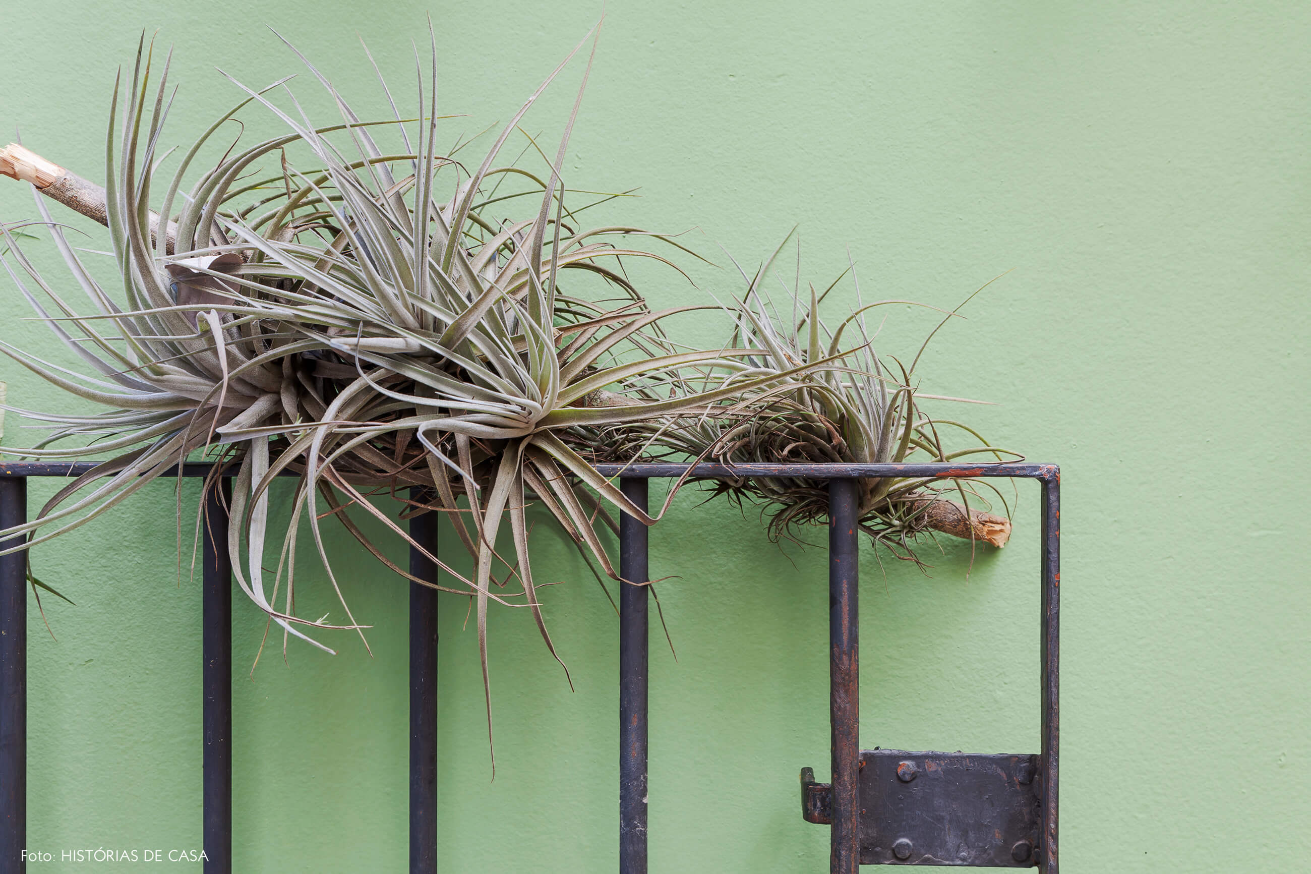Parede verde e jardim com airplants