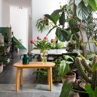 Capa Jardim Urbano, plantas do FLO