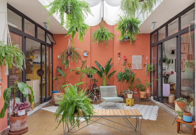 Quintal com parede pintada e muitas plantas