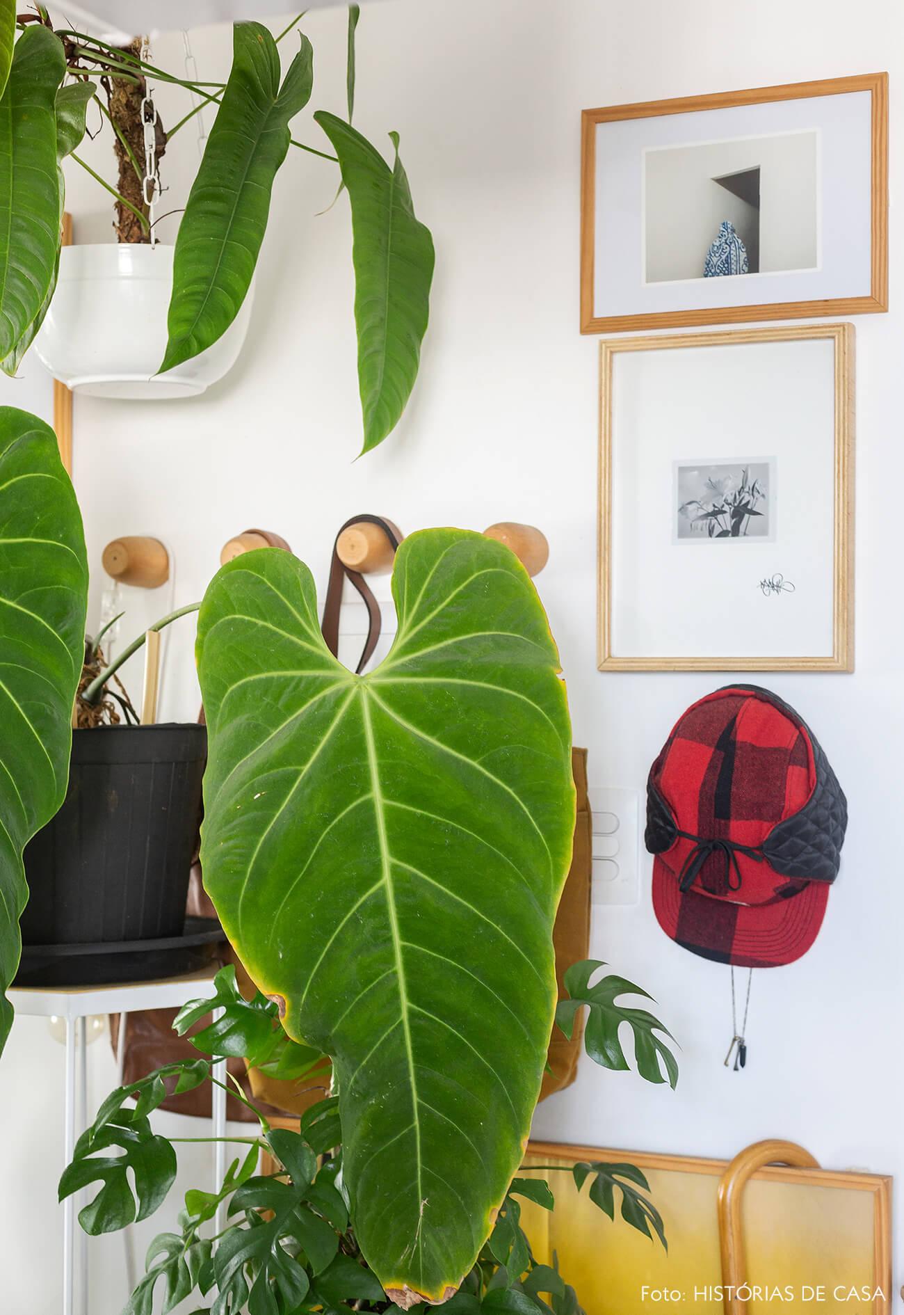 Apartamento pequeno com muitas plantas e espécies raras