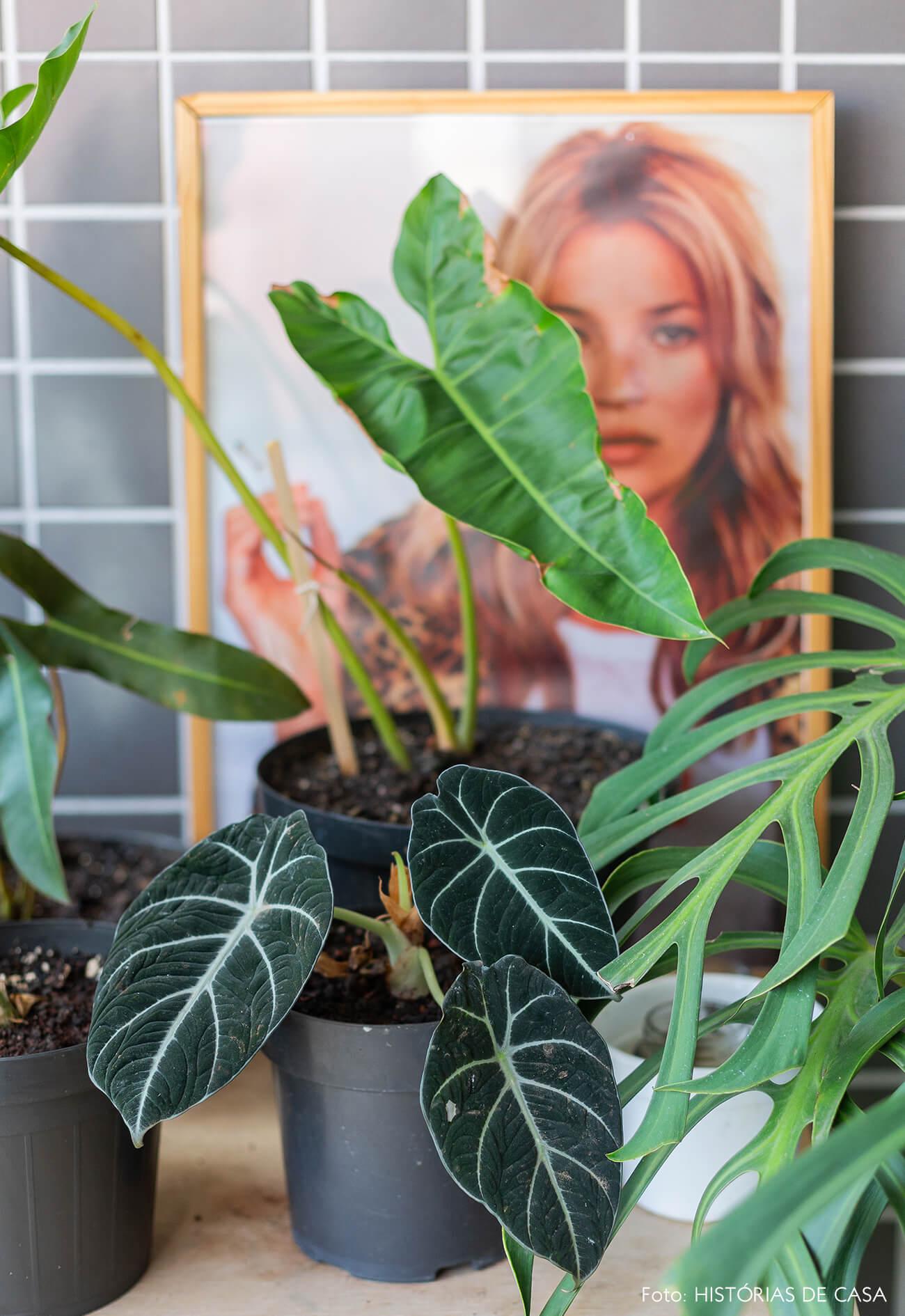 Apartamento pequeno com muitas plantas