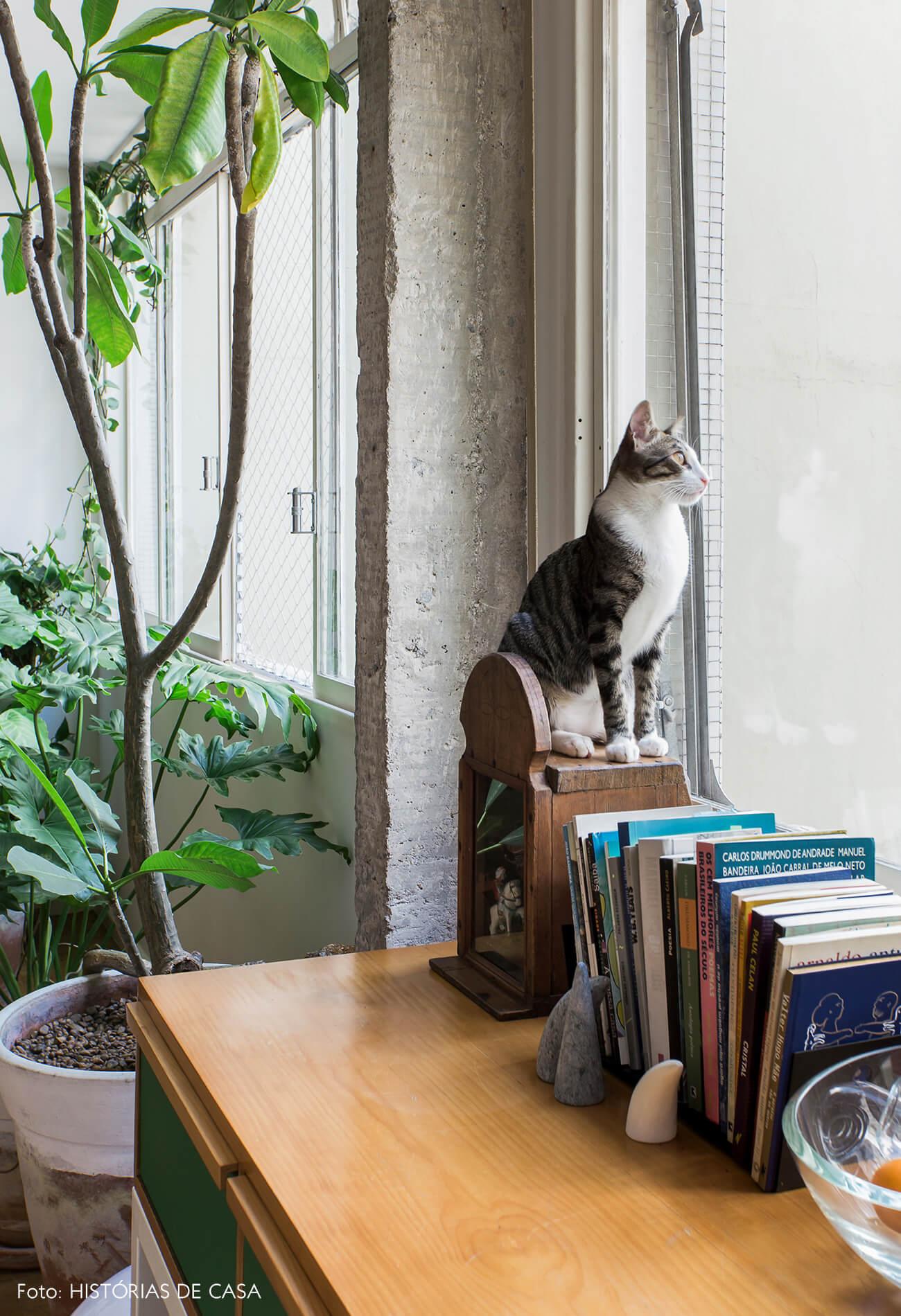 Casa com plantas e gatos
