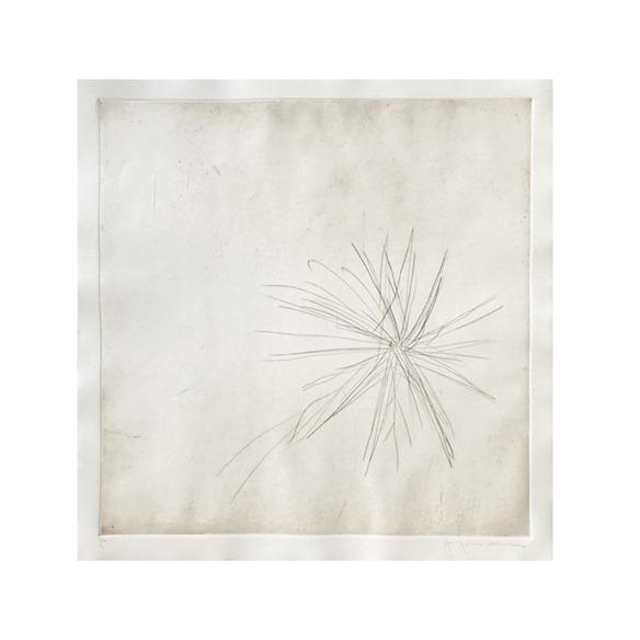 Estrela da mata // Jacqueline Aronis