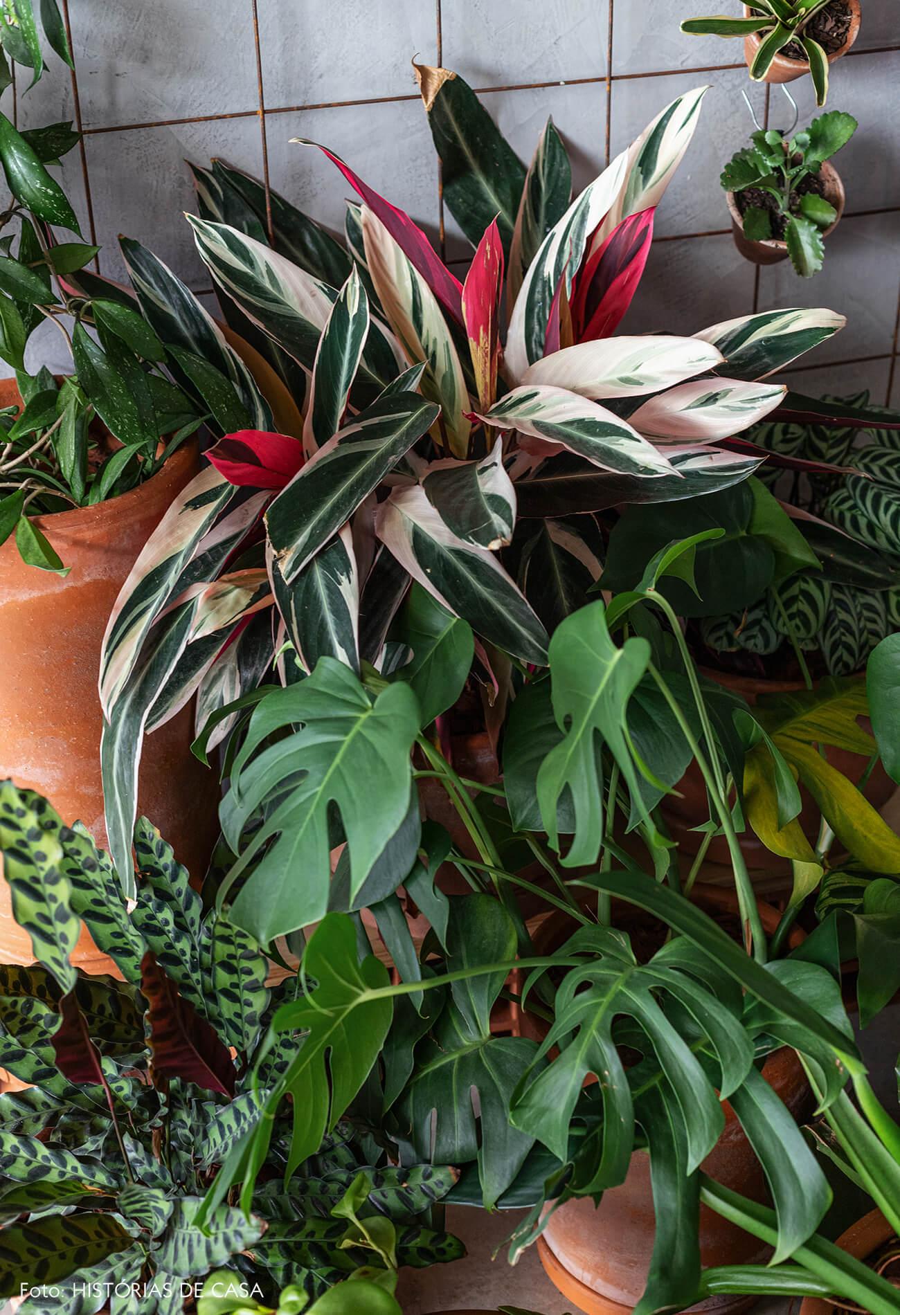 Apartamento pequeno no Copan, plantas em casa, vasos de barro