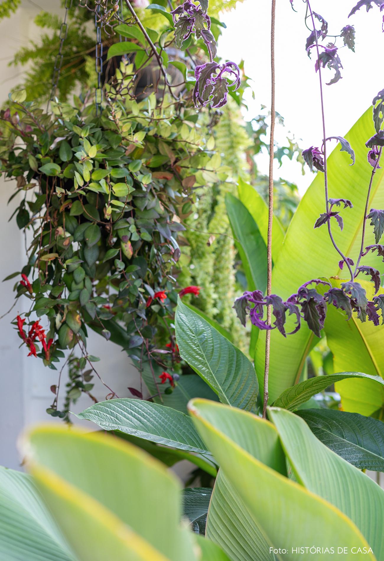 Casa com jardim e muitas plantas