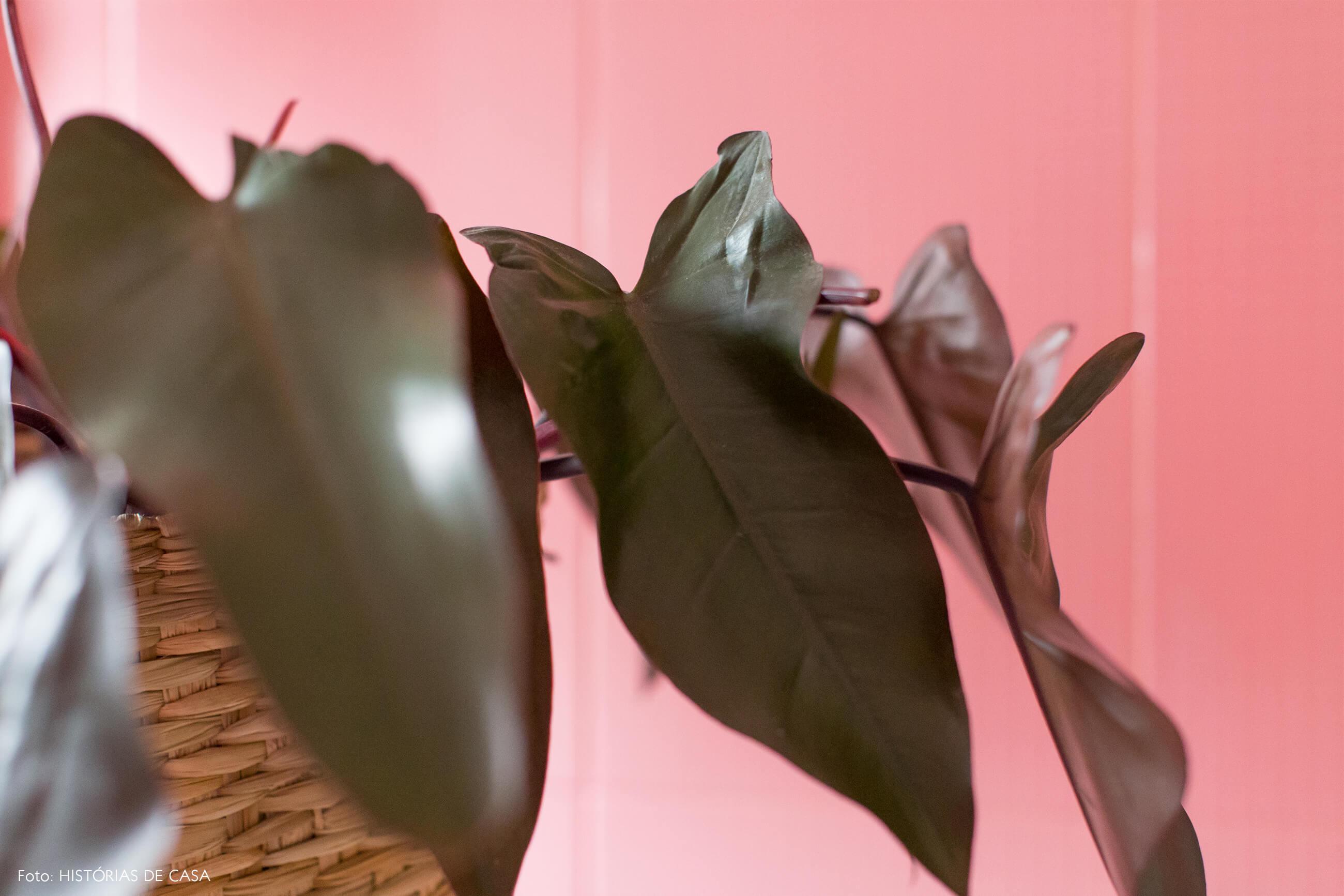 banheiro-parede-rosa-planta-cesto-palha