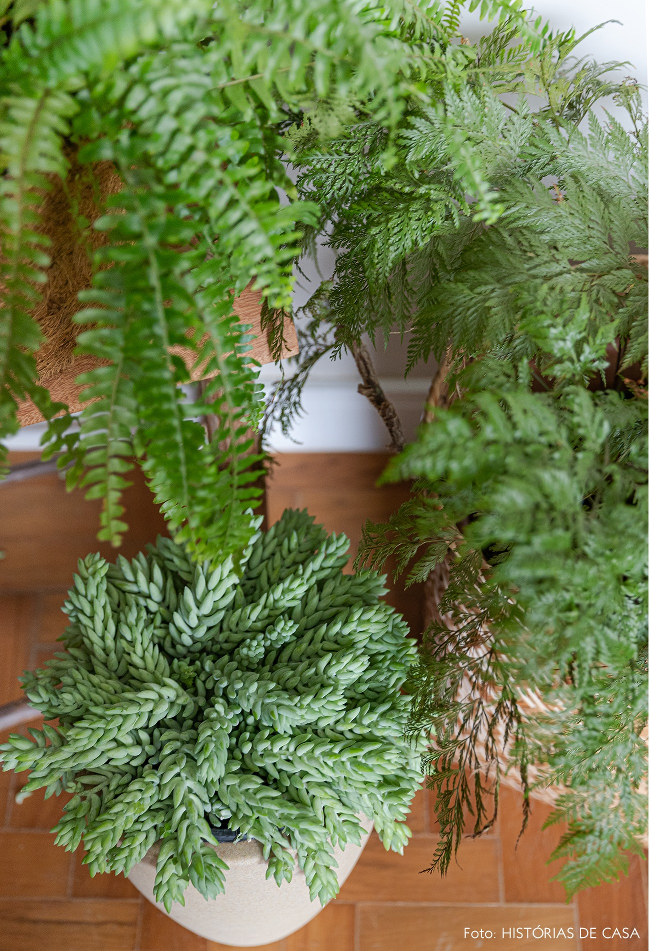 detalhes-plantas-cesto