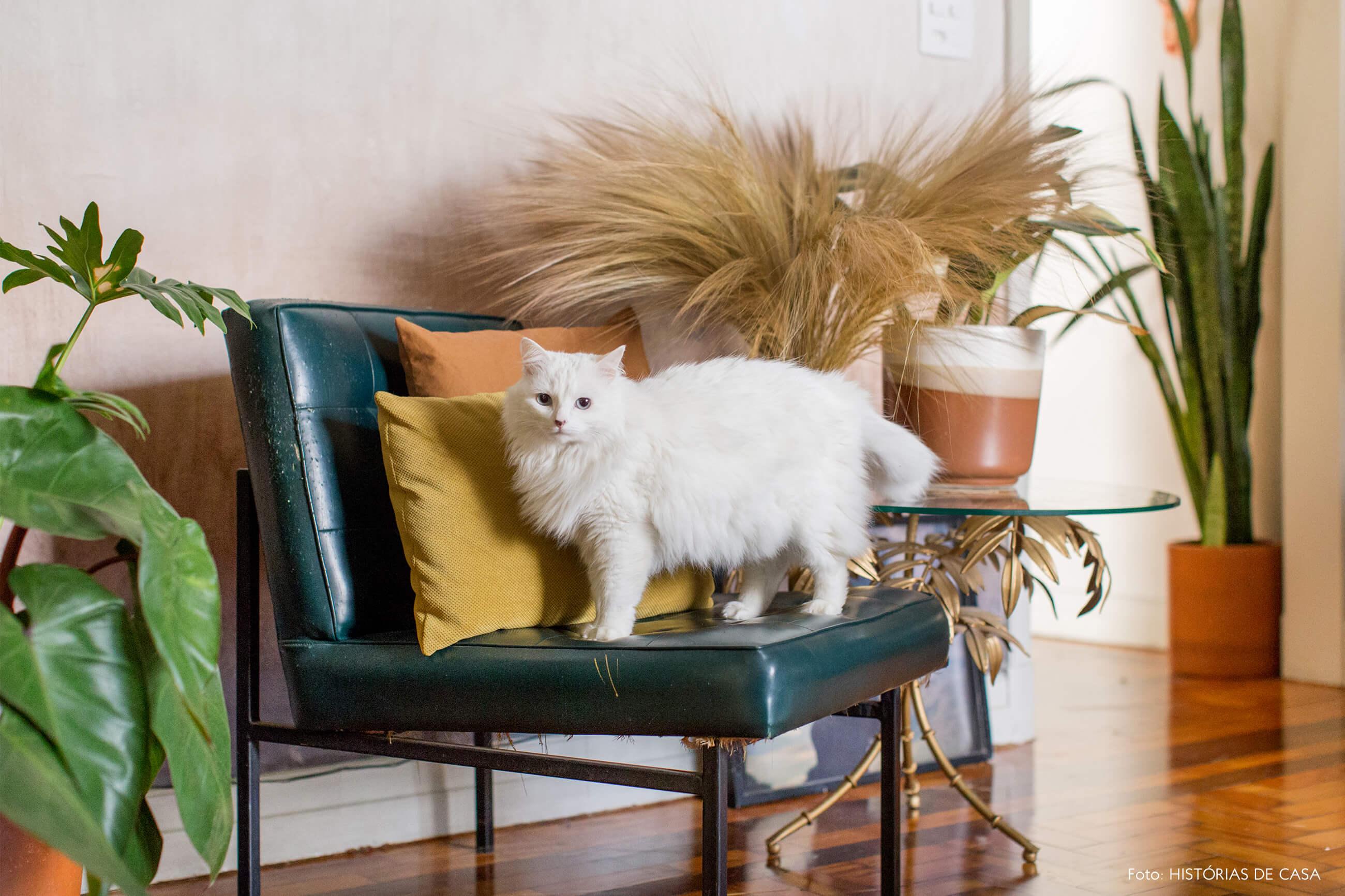 retrato gato na cadeira de couro e almofadas coloridas e plantas