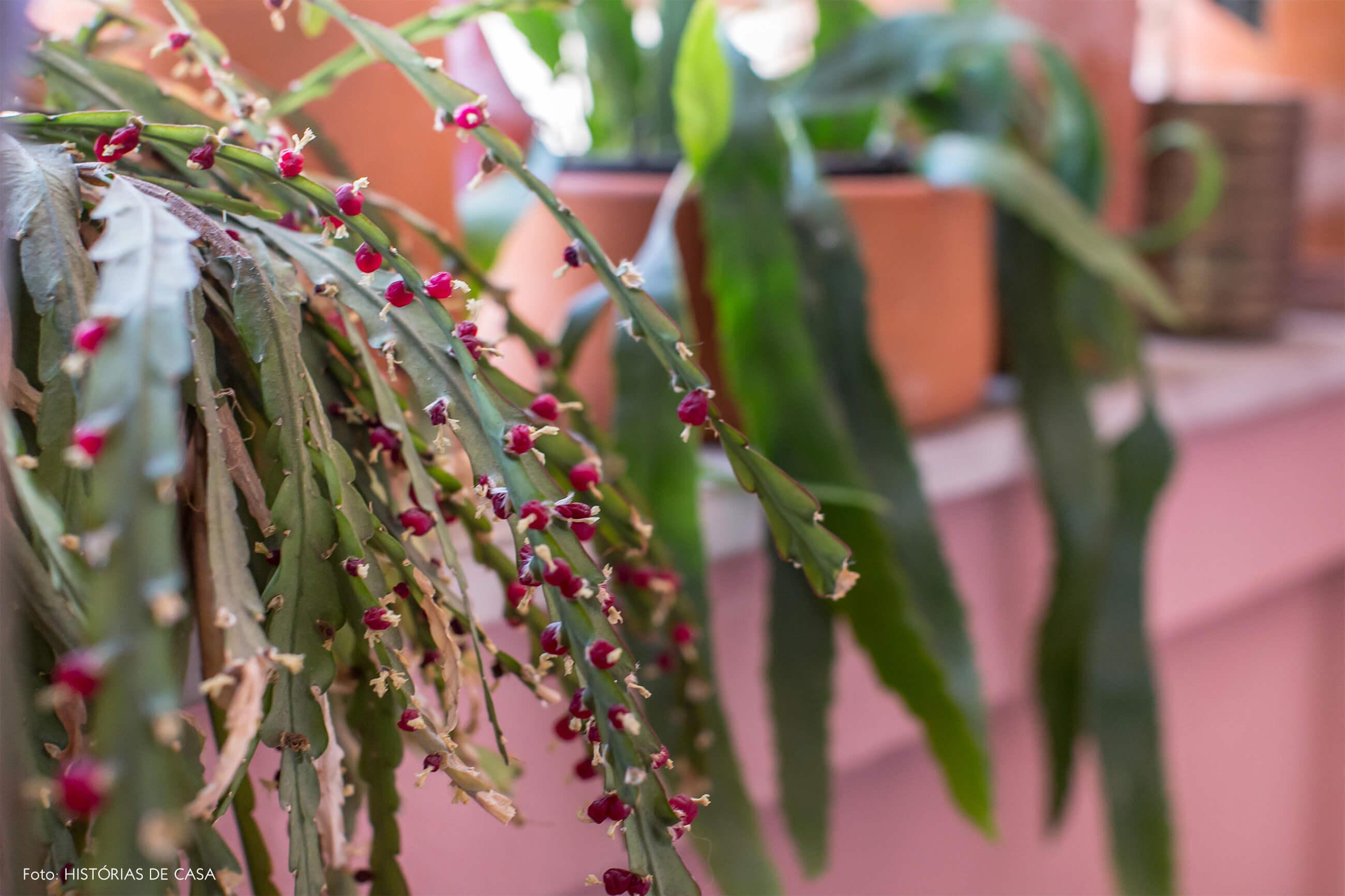 Detalhe plantas parede rosa