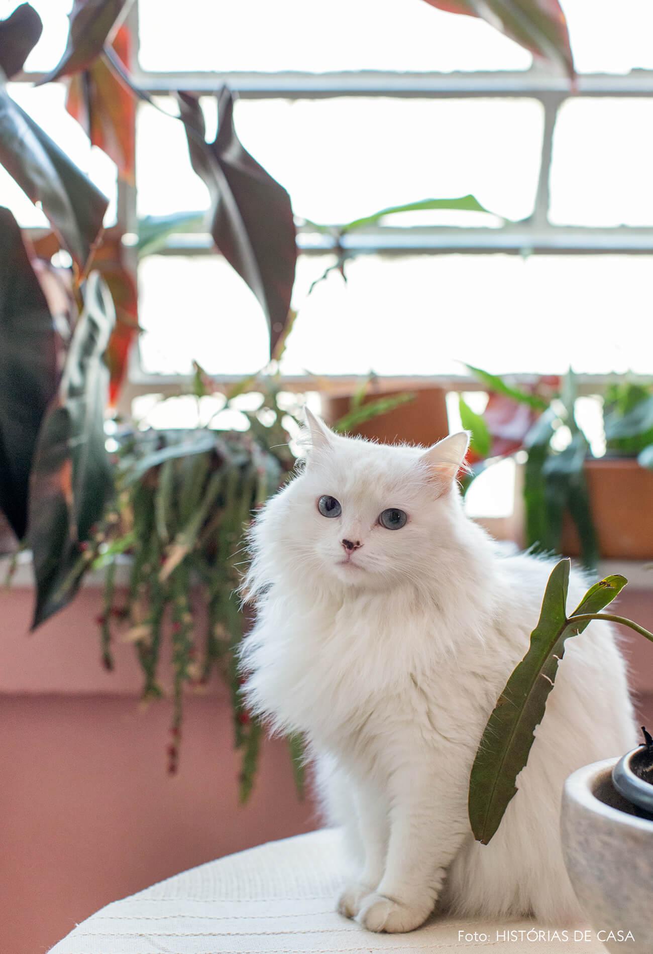 retrato pet gato