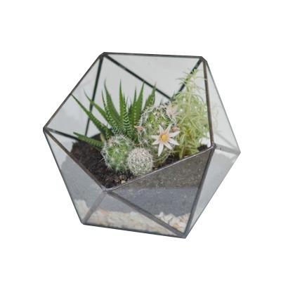 Terrário Icosaedro Partido
