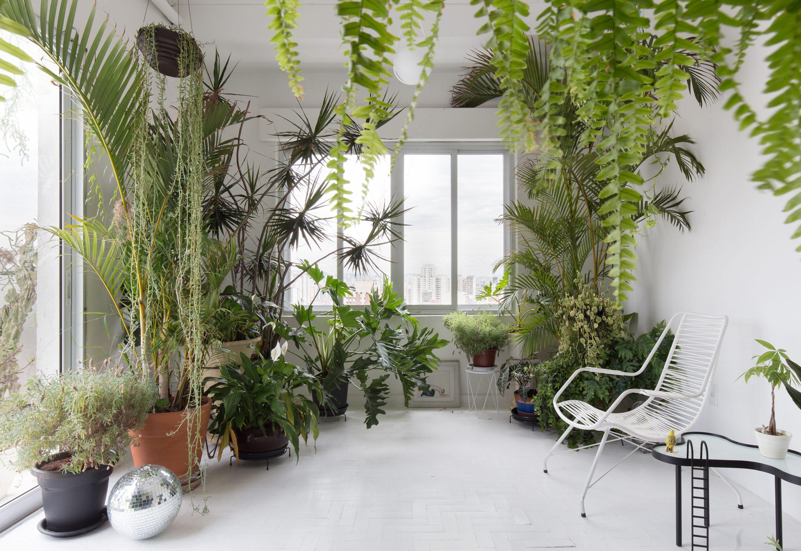 Apartamento de Felipe Morozini com muitas plantas