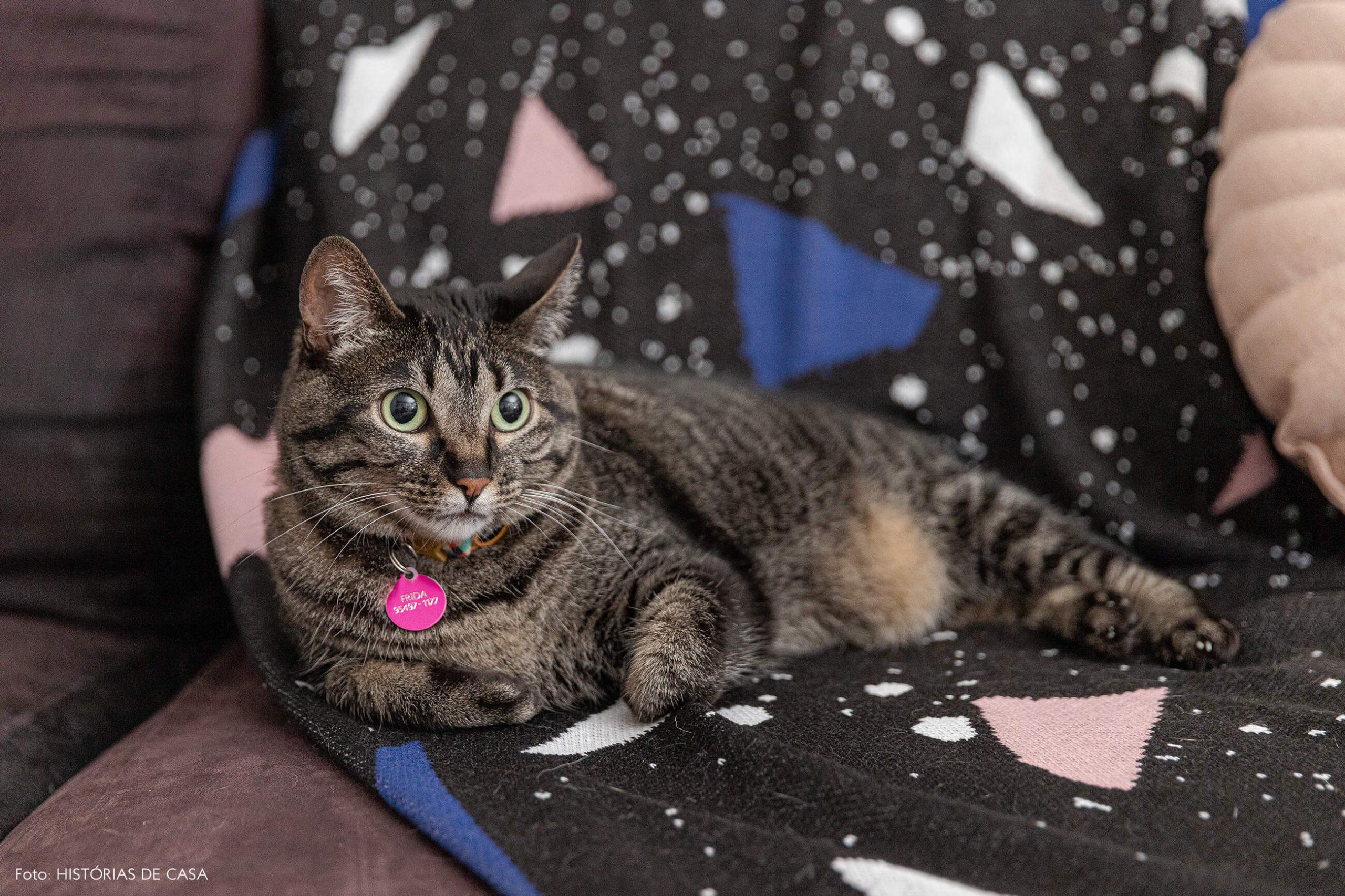 retrato-pet-gato
