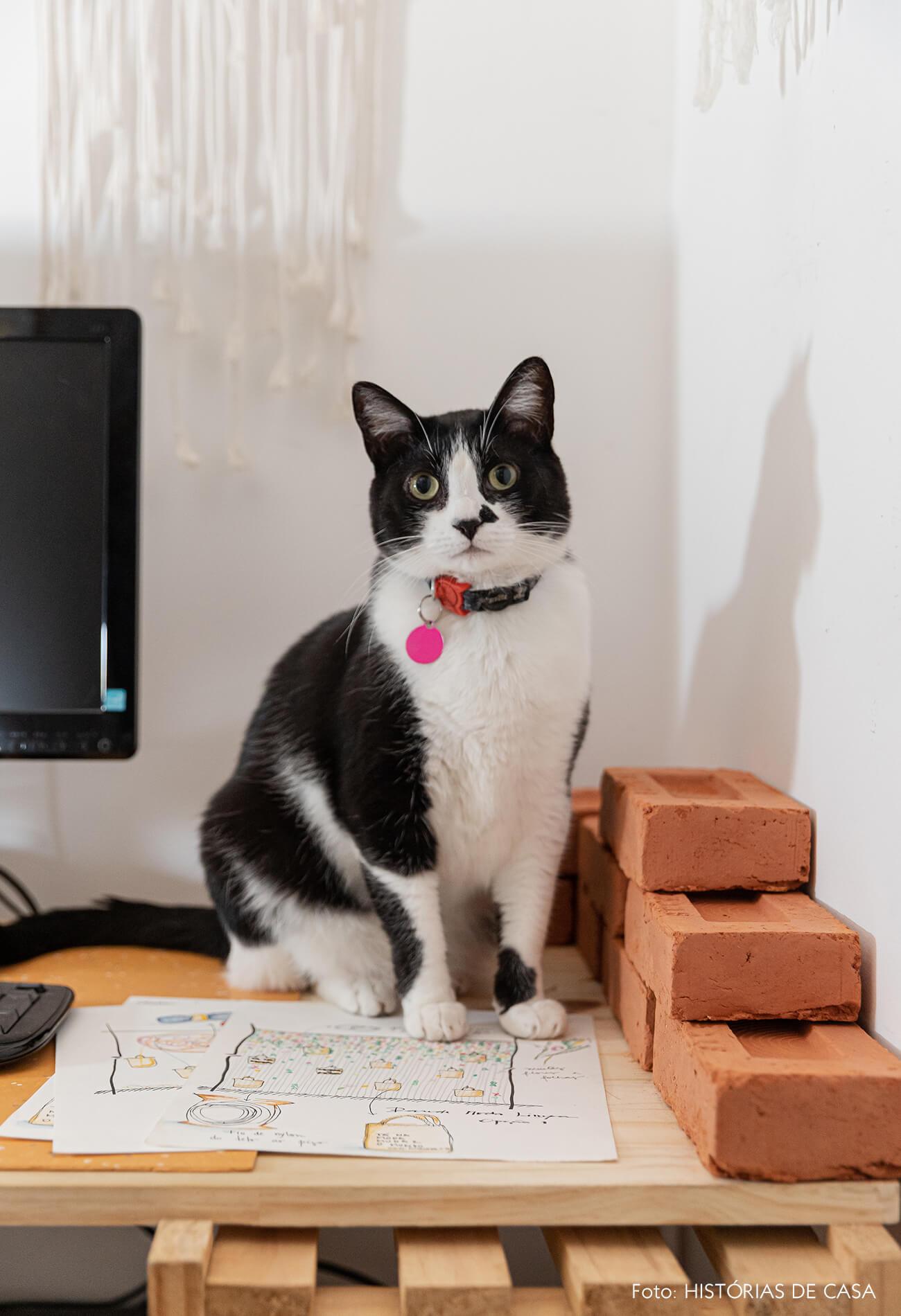 retrato-gato-em-mesa-madeira