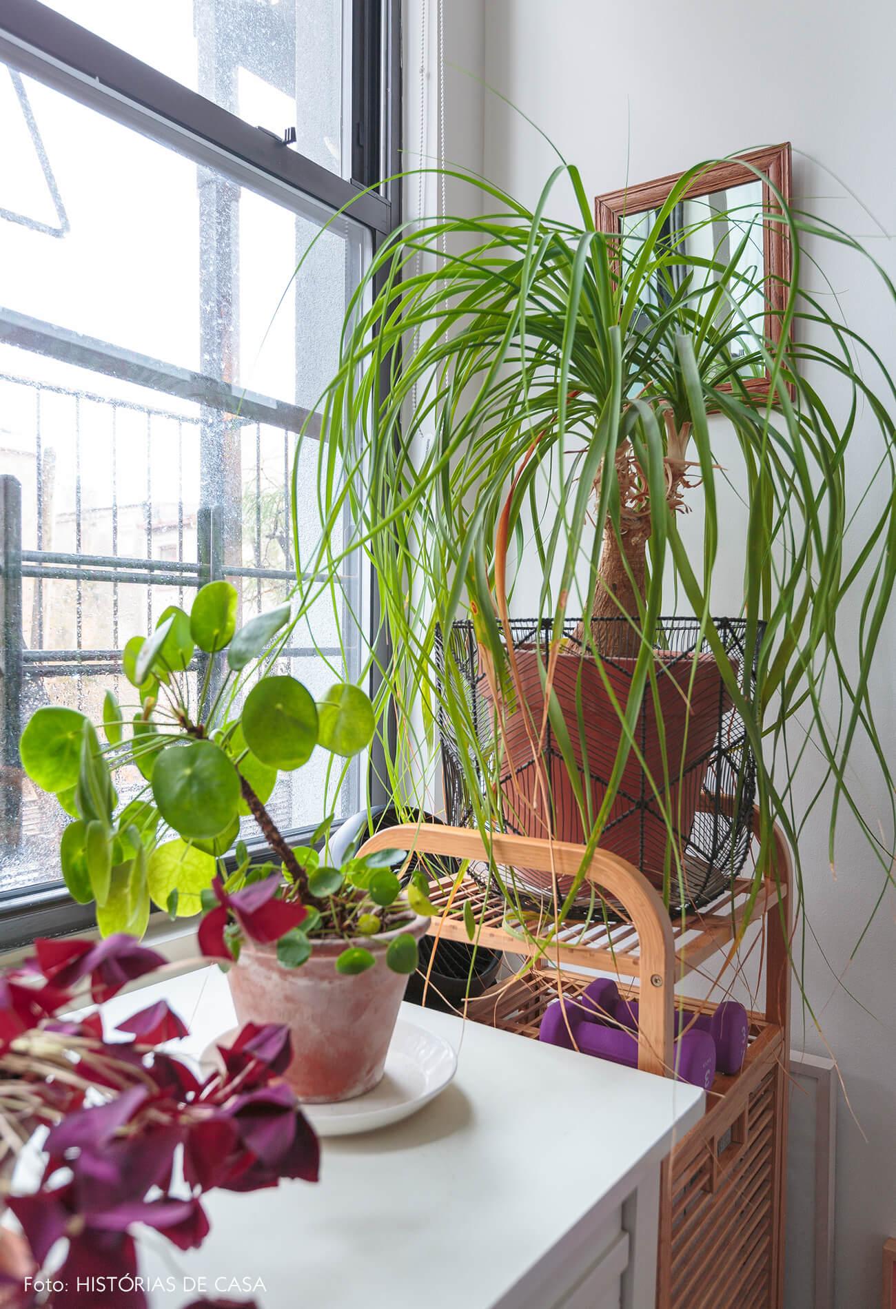 ap deecoração quarto com muitas plantas