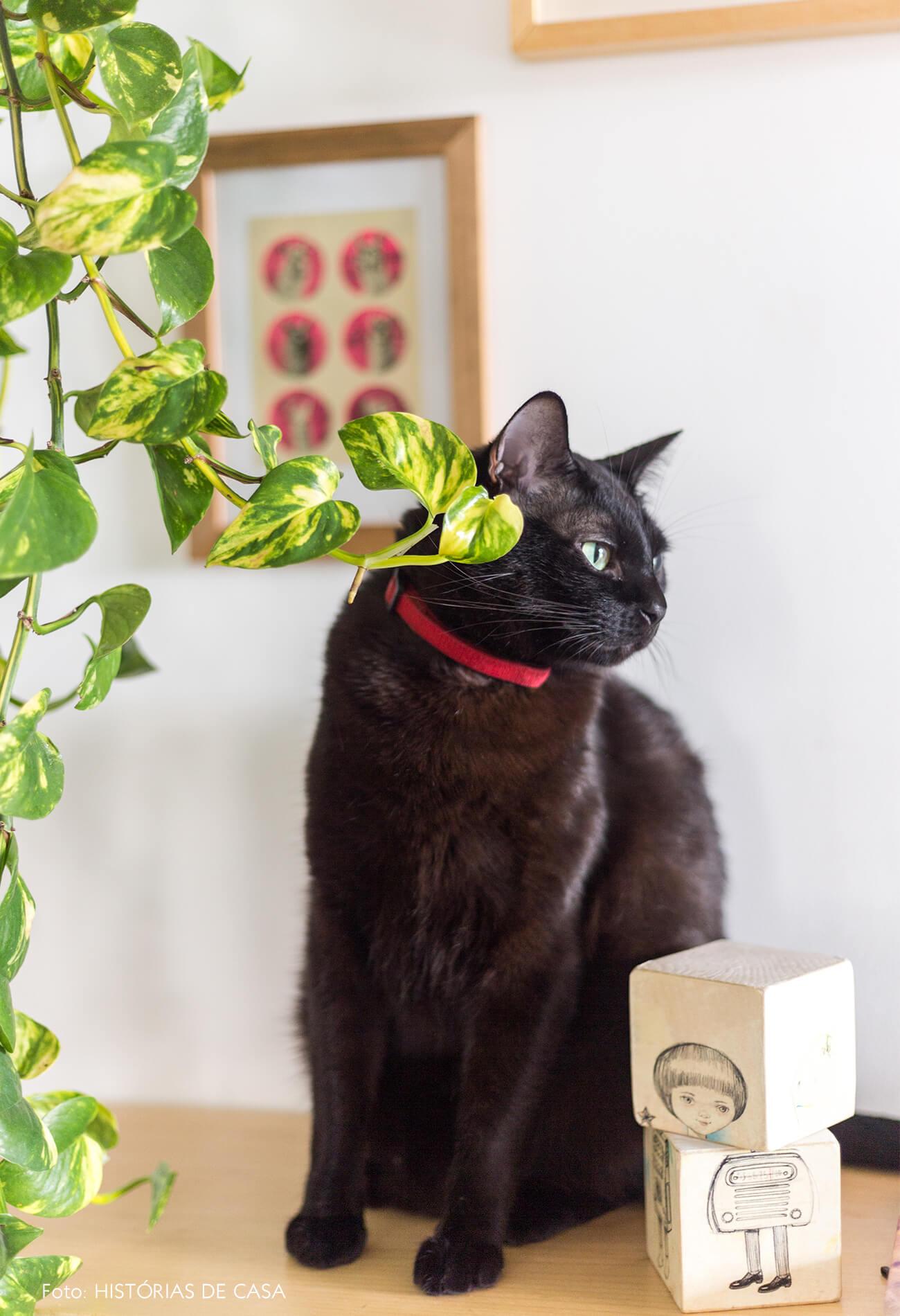 decoração retrato gato