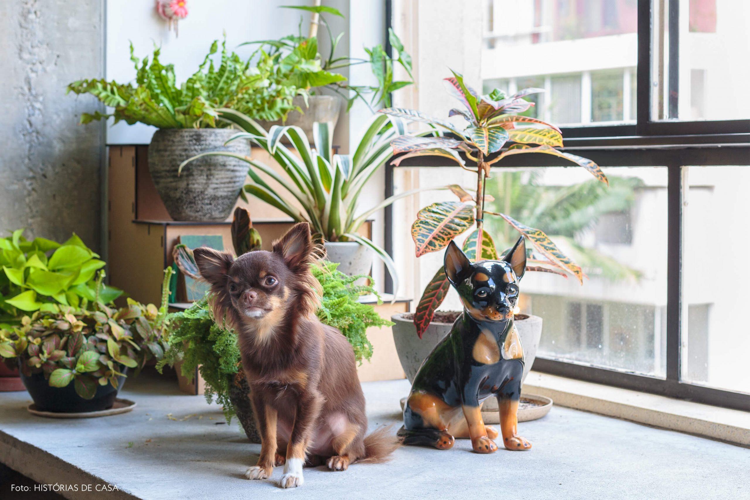 decoração ap cachorro e plantas em banco de concreto