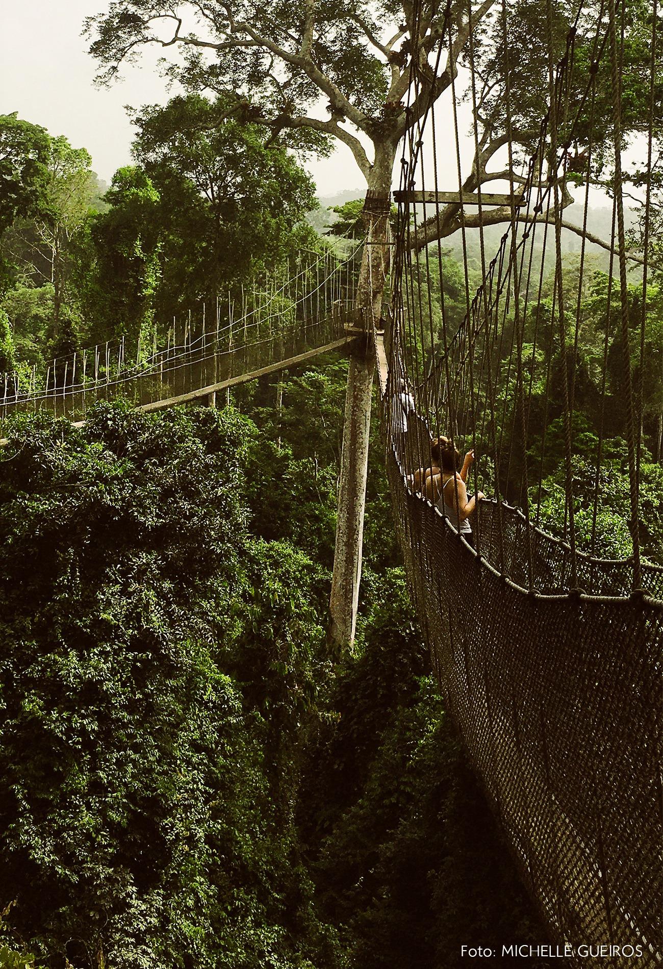 Gana viagem arvorismo ponte natureza