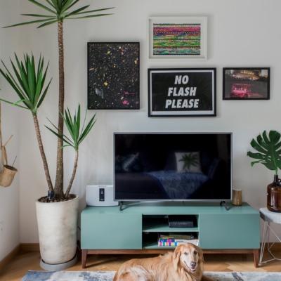 decoração rack azul sala com plantas