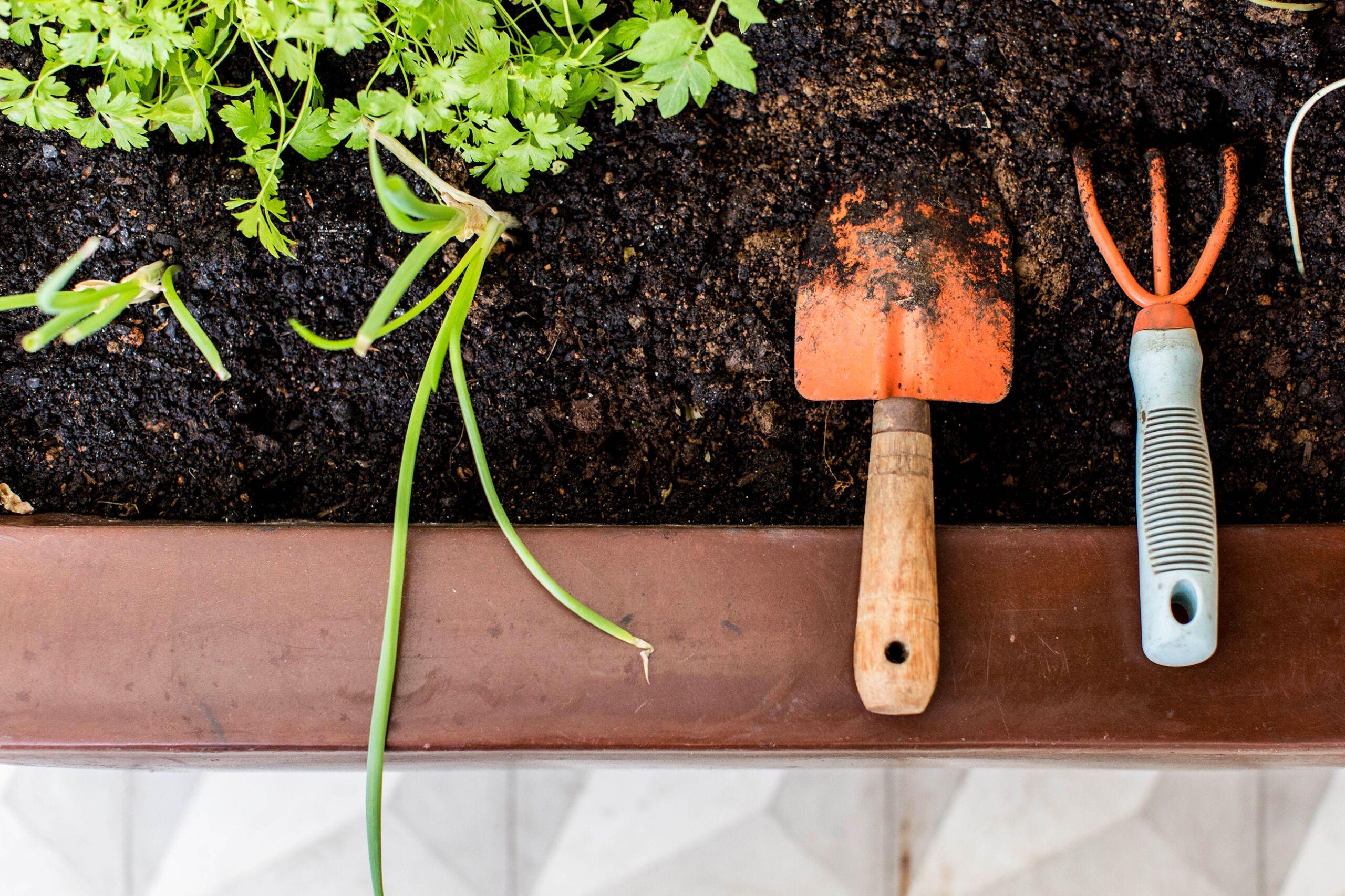 Como ter uma horta em casa, dicas de cultivo de ervas e temperos, plantas em casa
