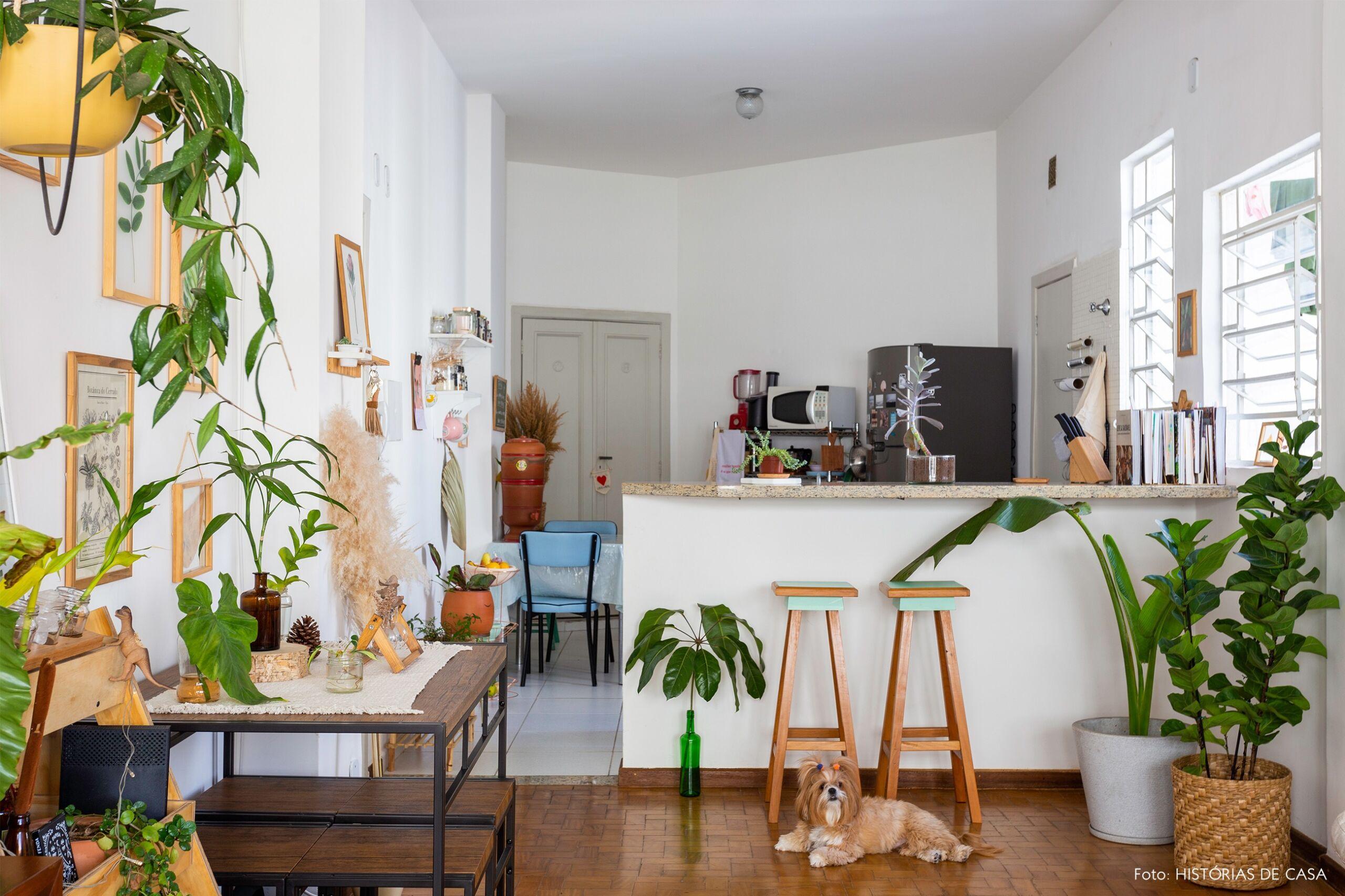 decoração sala cozinha integrados cesto ficus banco madeira