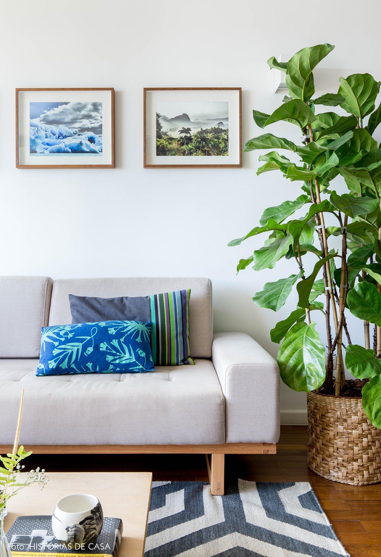 Dicas de plantas com a Carol Costa, no Histórias de Casa