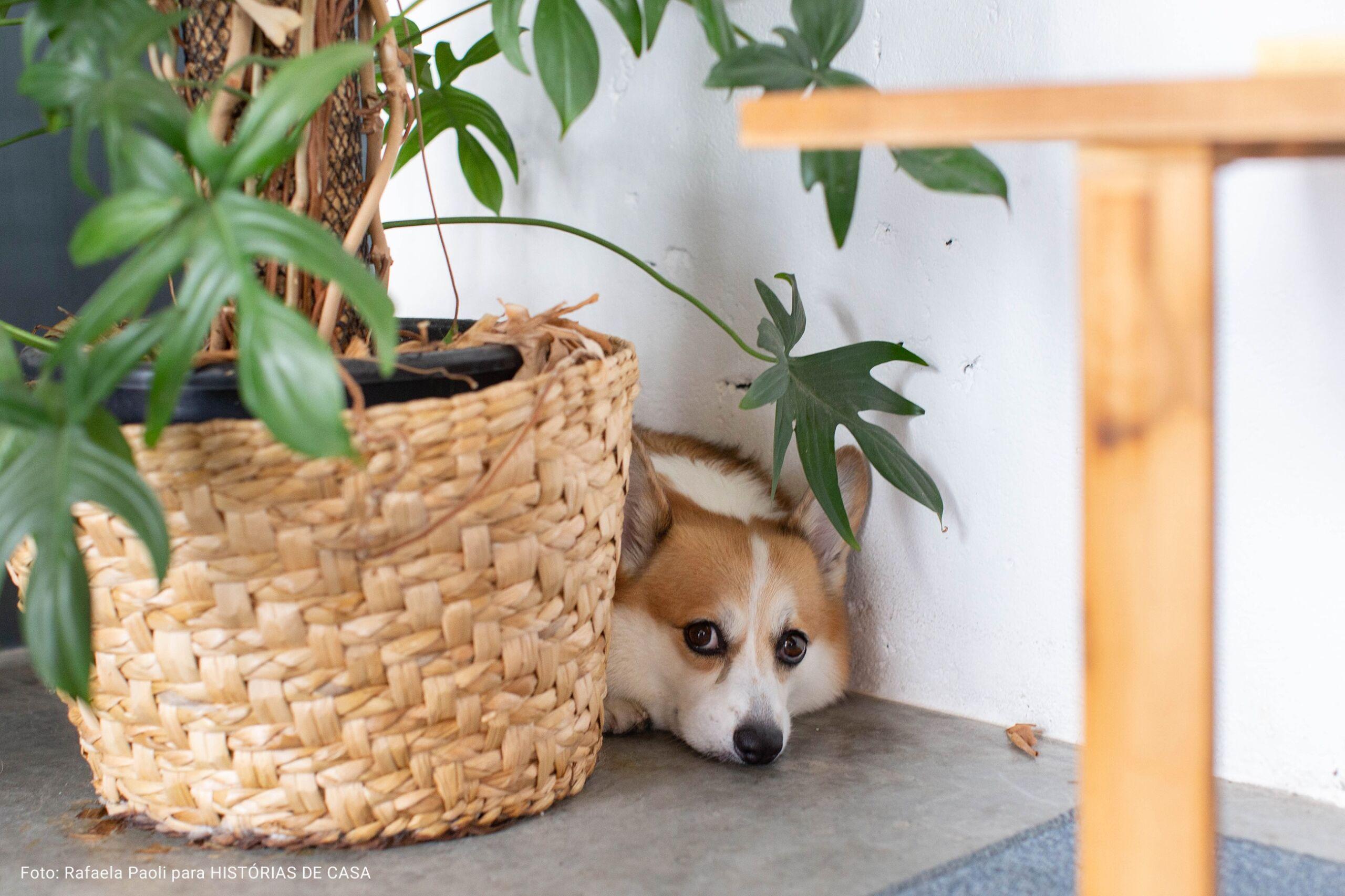 close cachorro ao lado de vaso