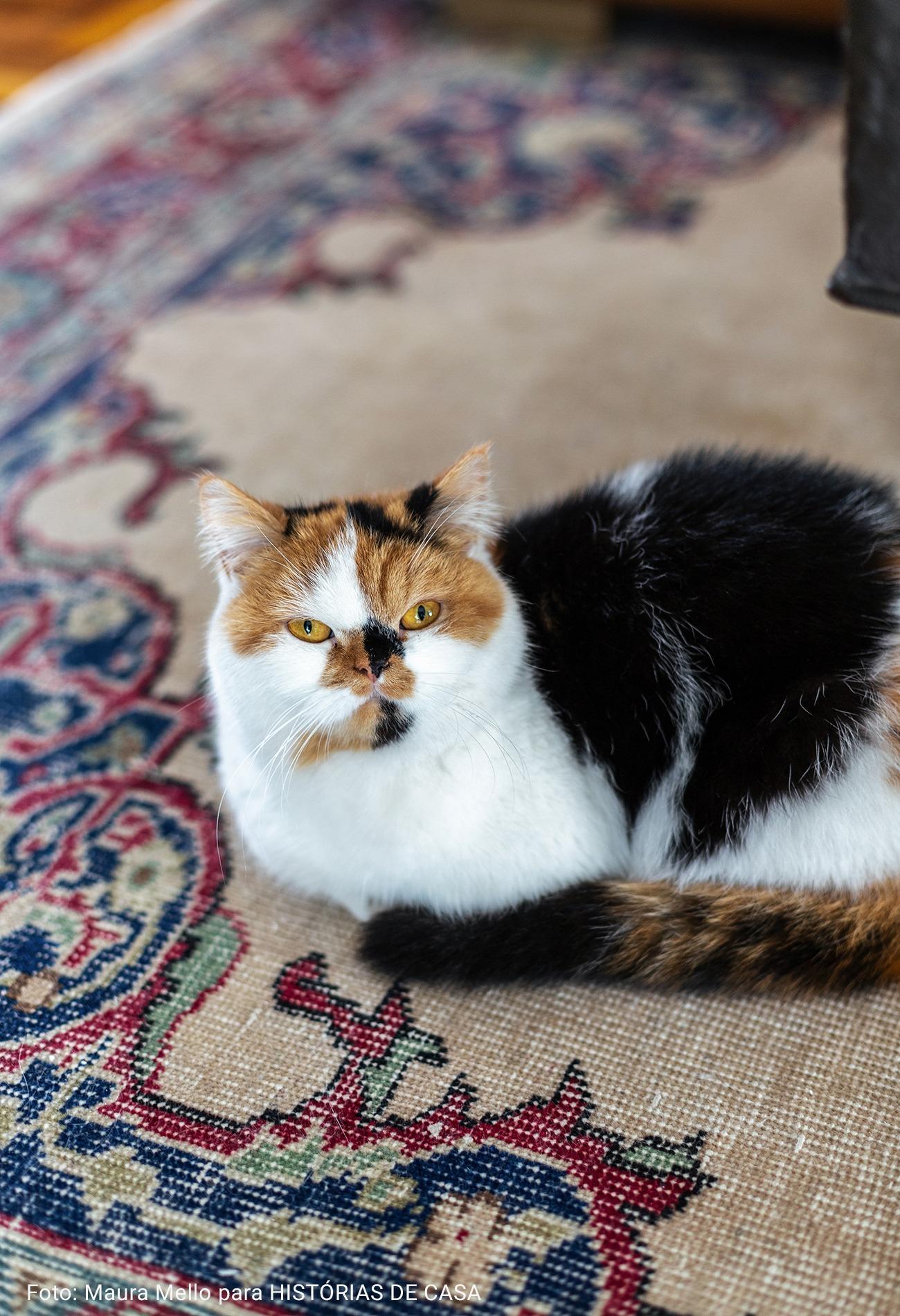 gatinho persa em tapete vintage