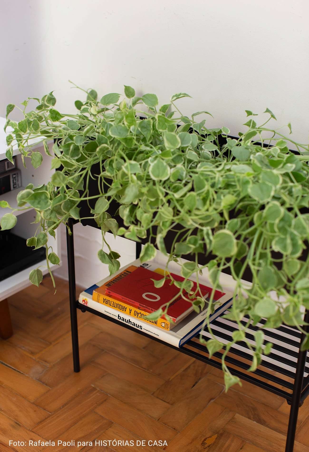 cahcepot de ferro com plantas e livros