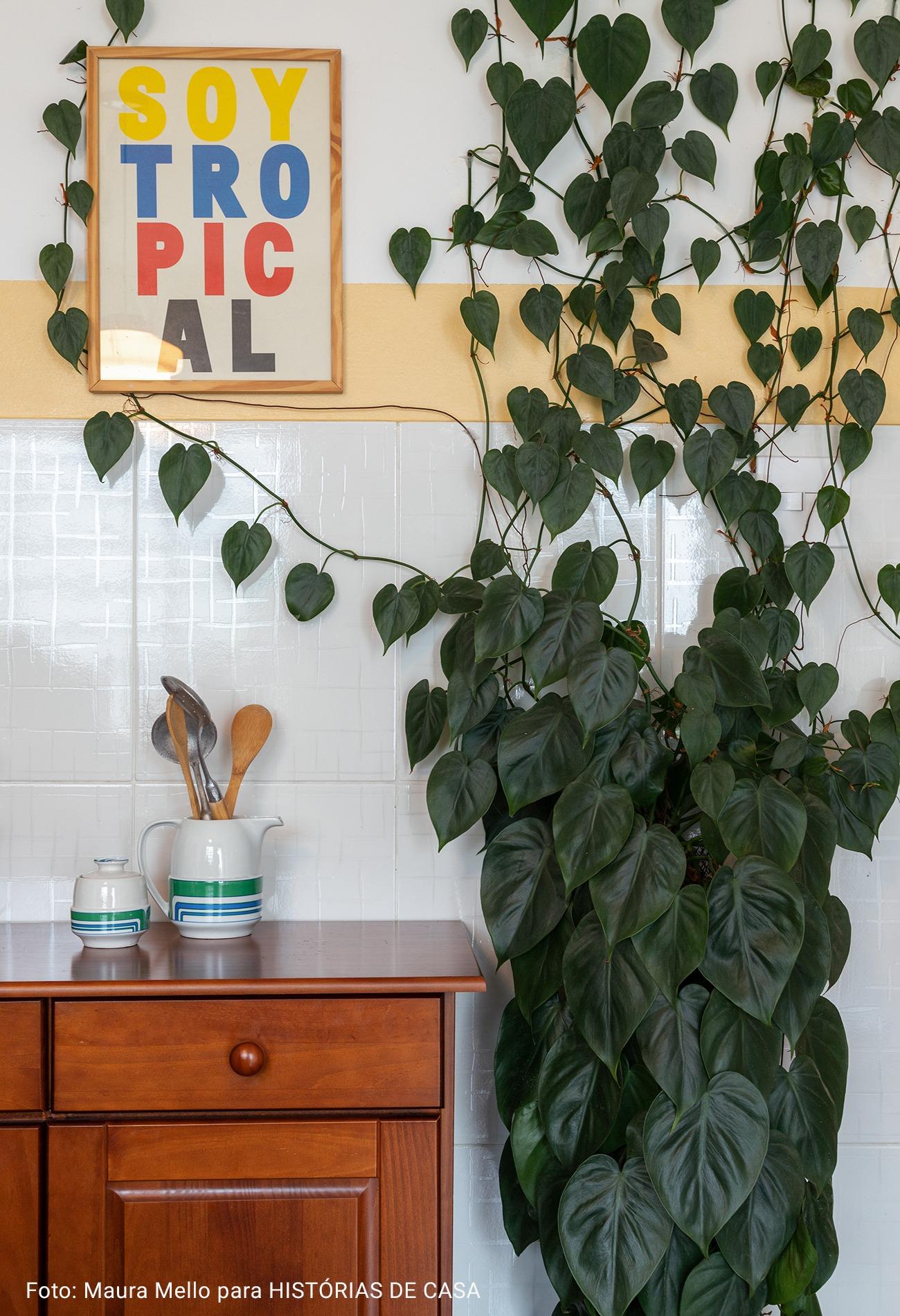 cozinha com planta espalhada natural pela parede