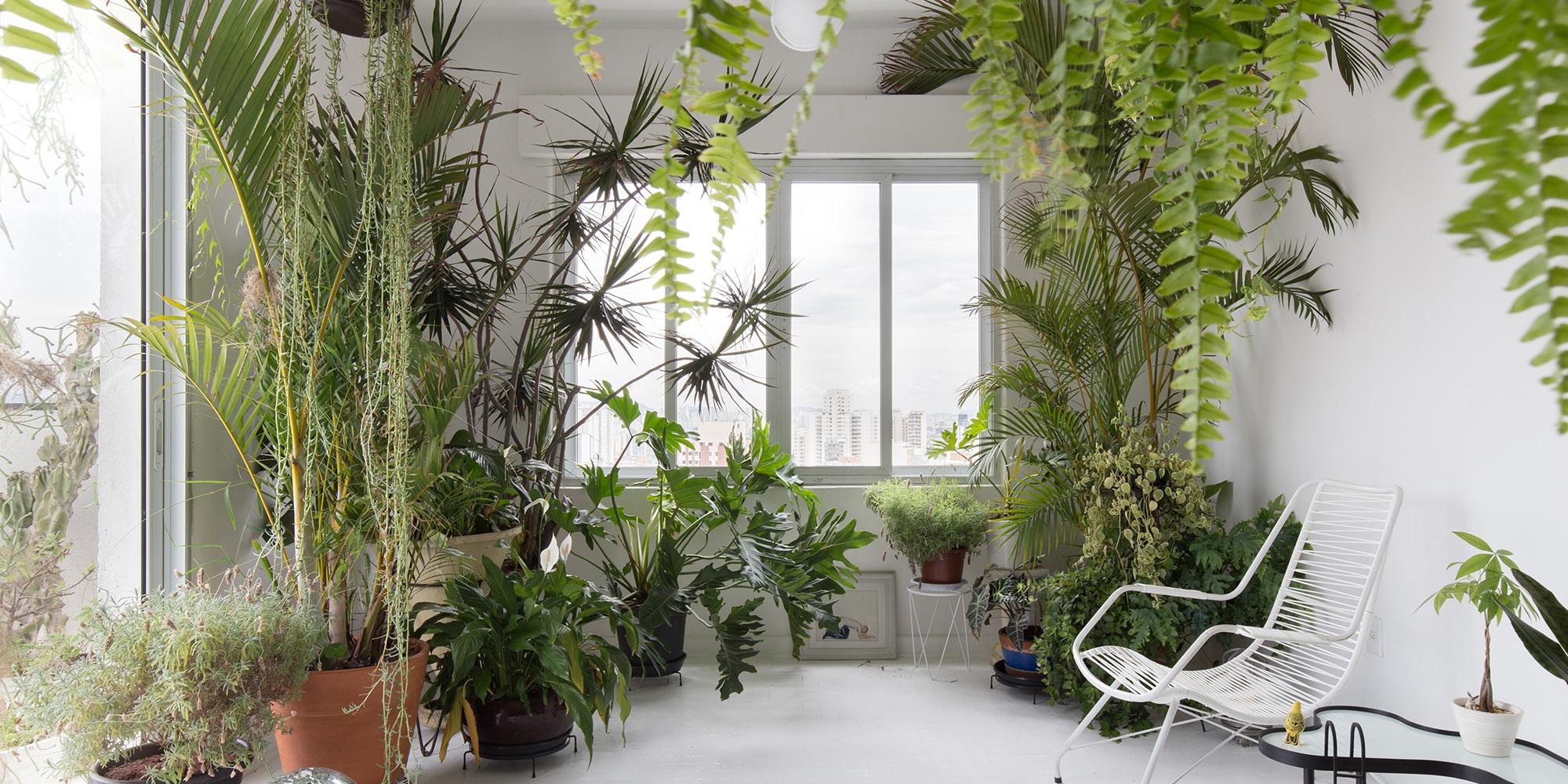 Apartamento com plantas e piso branco