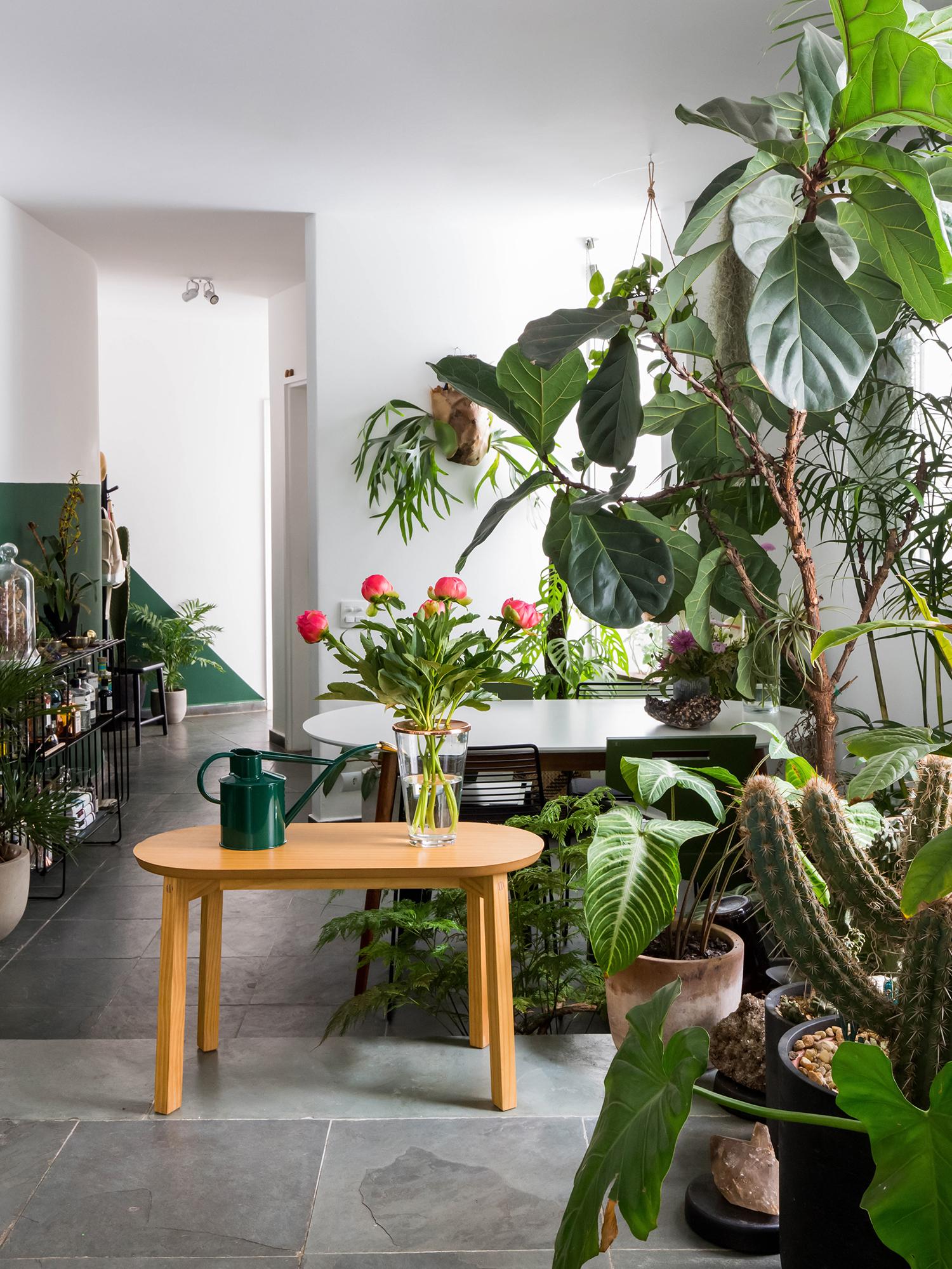 Plantas em casa, urban jungle