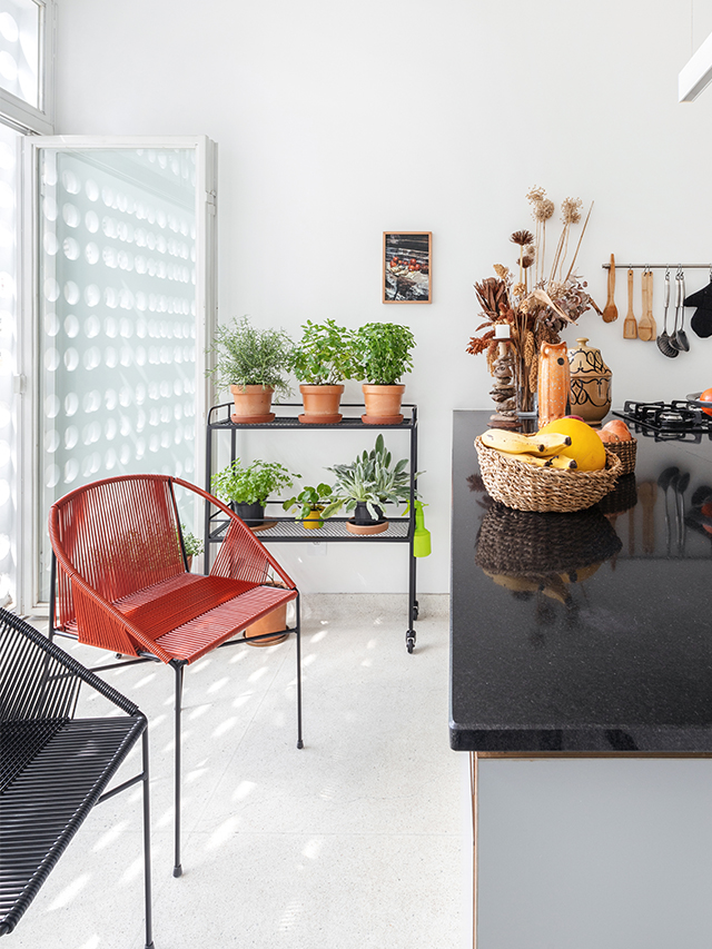 Como ter uma horta em casa ou em apartamento, plantas, Carol Costa
